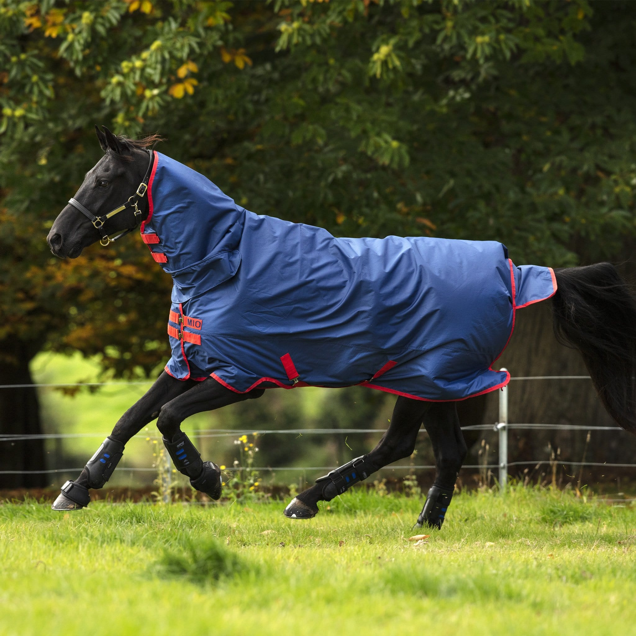 Mio All-In-One Heavyweight 350g Turnout Rug AASJ44 Dark Blue and Red