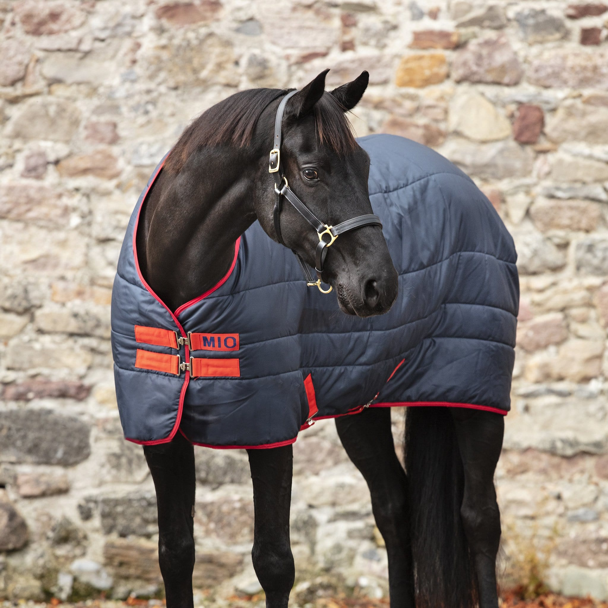 Mio Insulator Heavyweight 300g Standard Neck Stable Rug ABSB33 Navy and Red