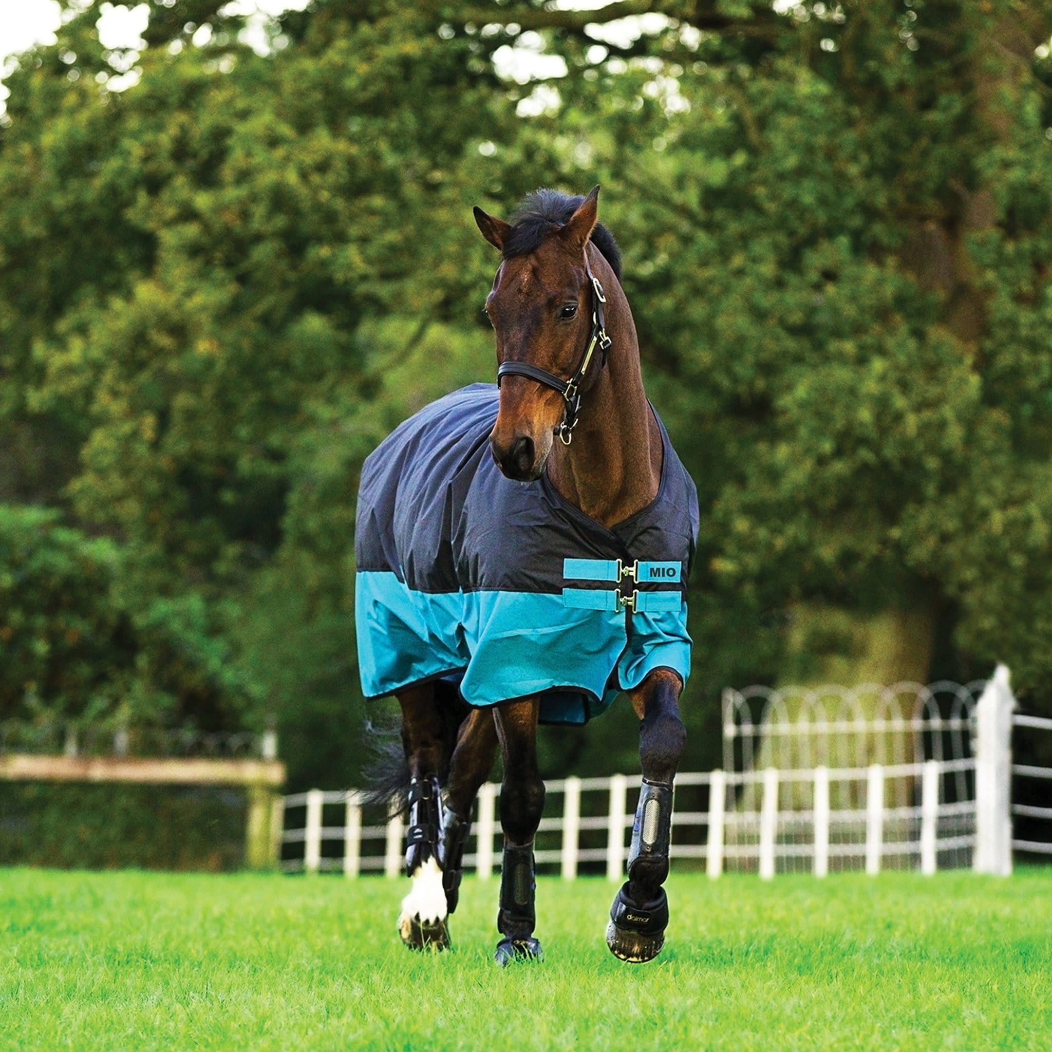 Mio Medium 200g Standard Neck Turnout Rug Black and Turquoise AASA42