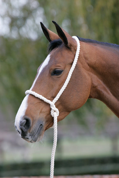 JHL Cotton Rope Halter 460010