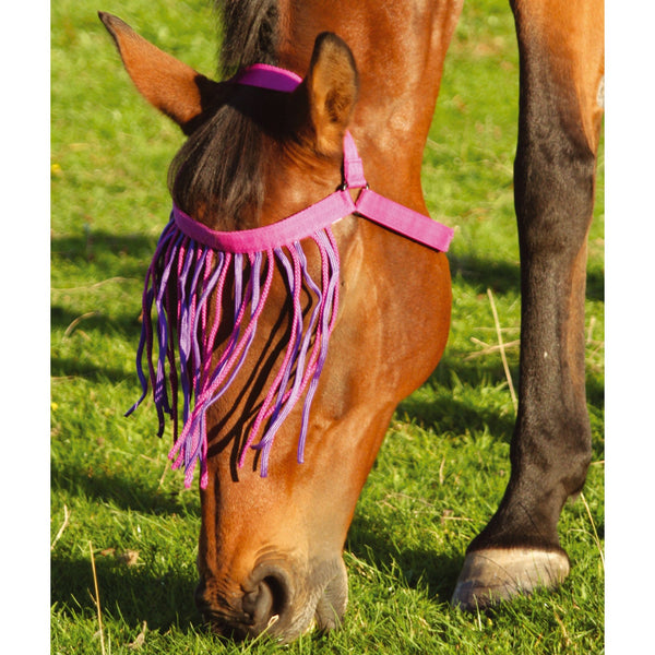 JHL Halter Fringe in Fuchsia and Purple on a grazing horse 312478