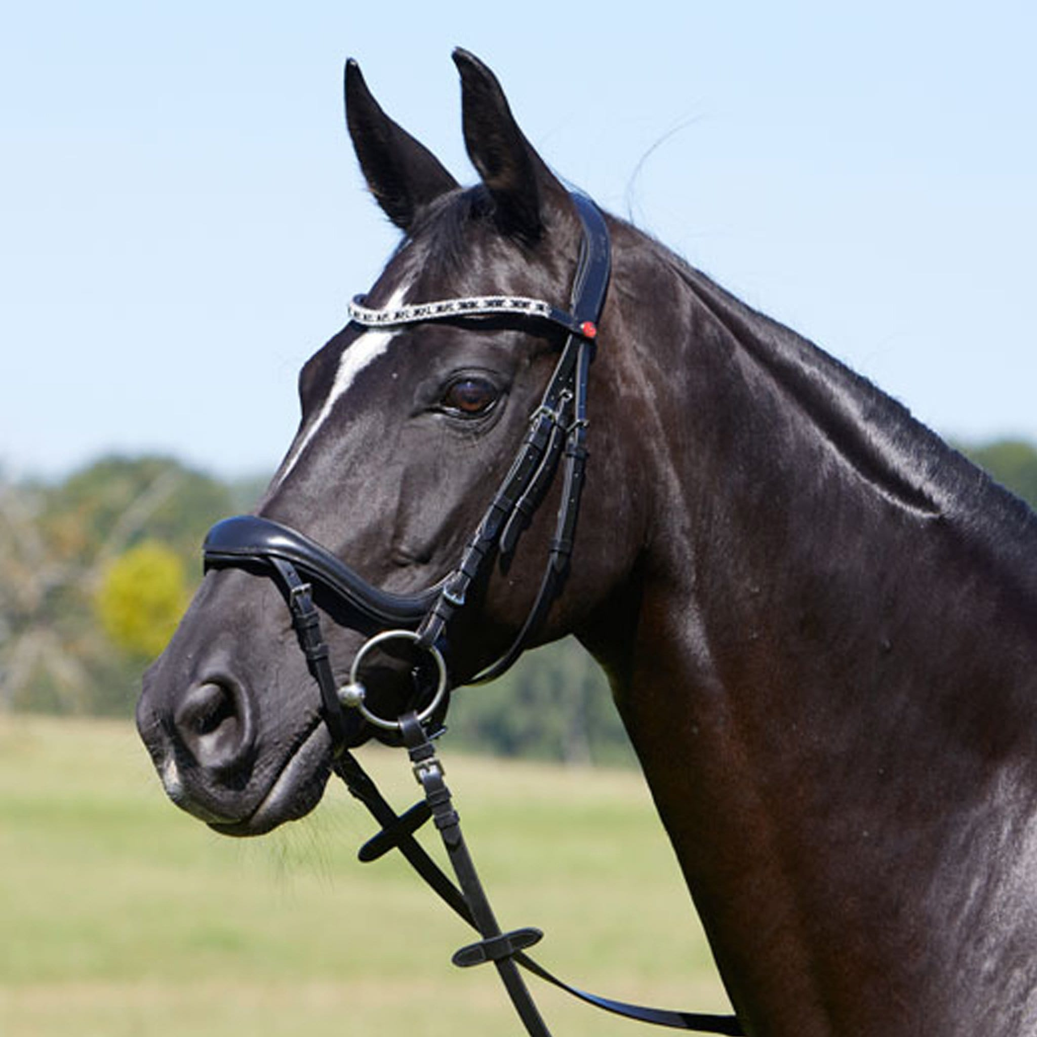 Kieffer Viola Snaffle Bridle 28293 Black On Horse