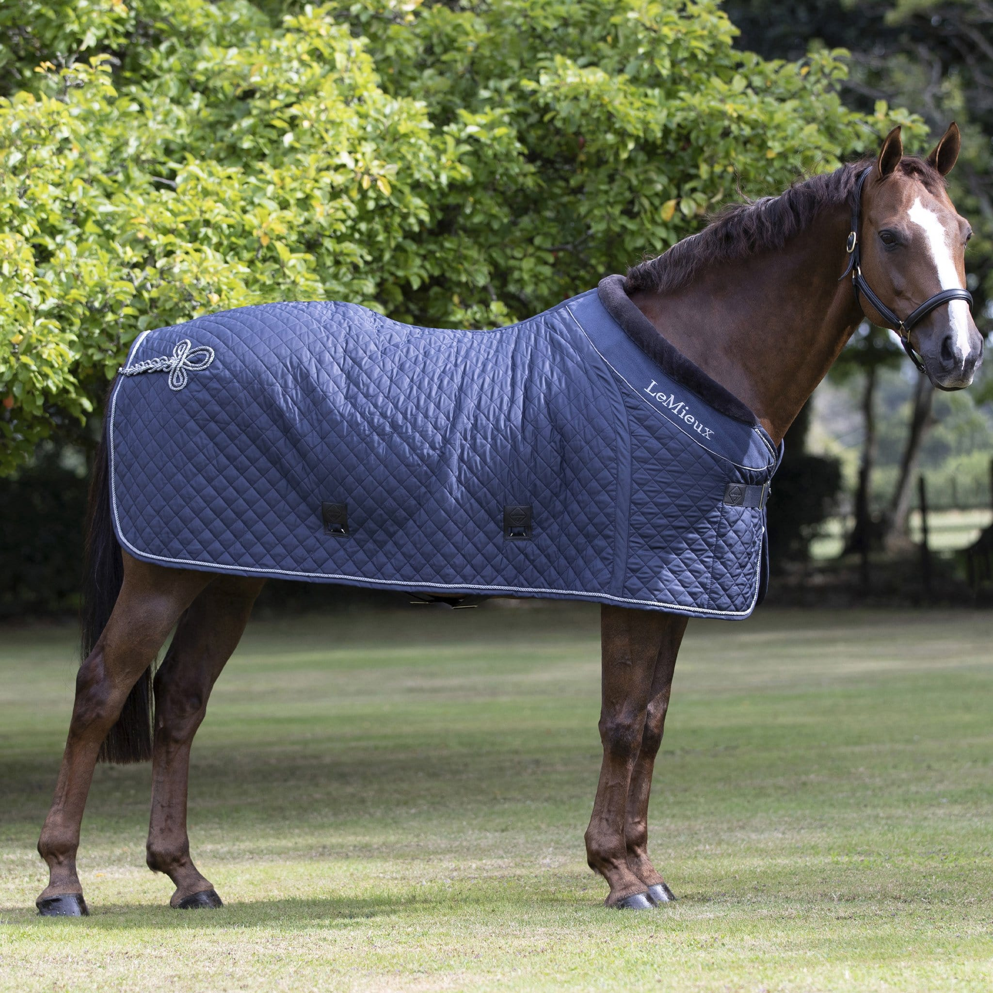 LeMieux Lustre Rug 5318 Navy On Horse Right Side