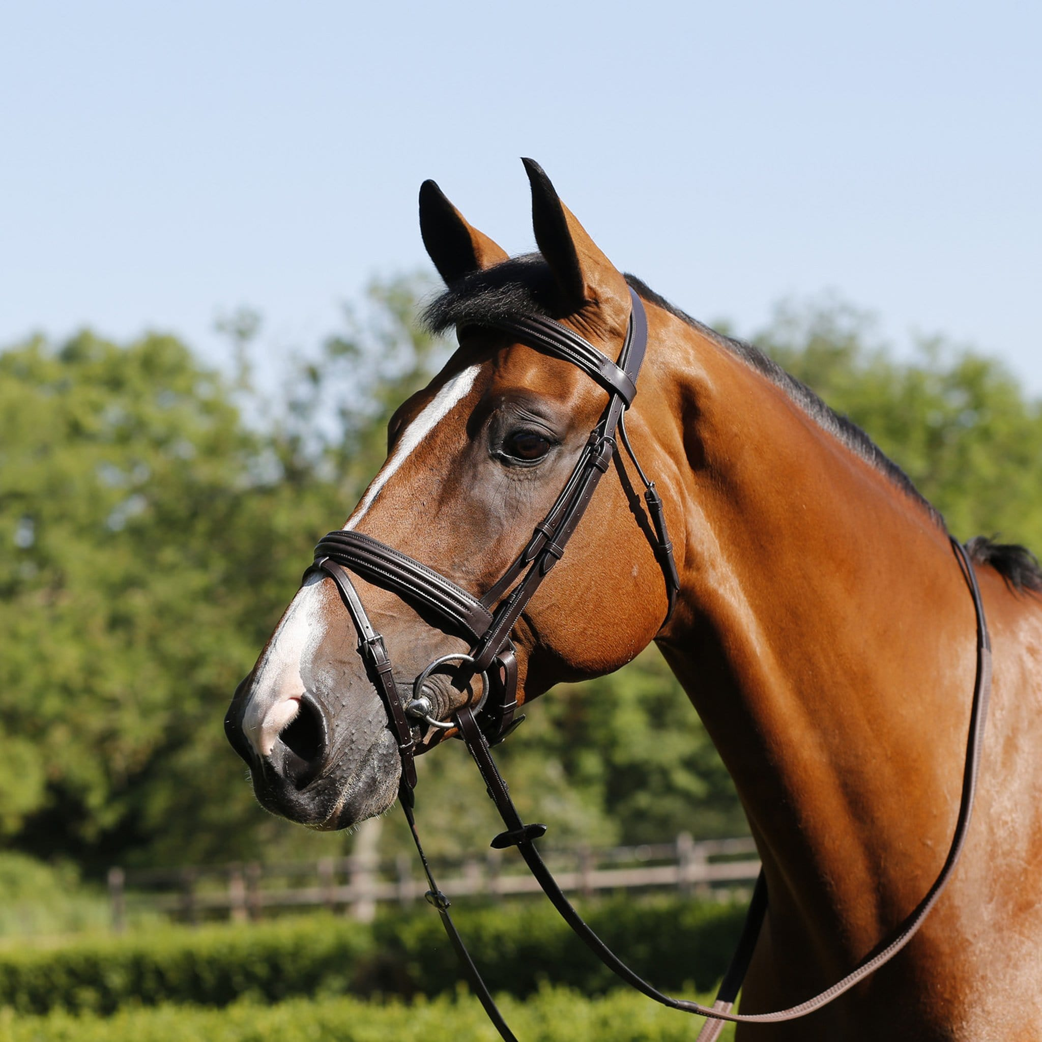 Mark Todd Double Raised Bridle Havana TOD884347