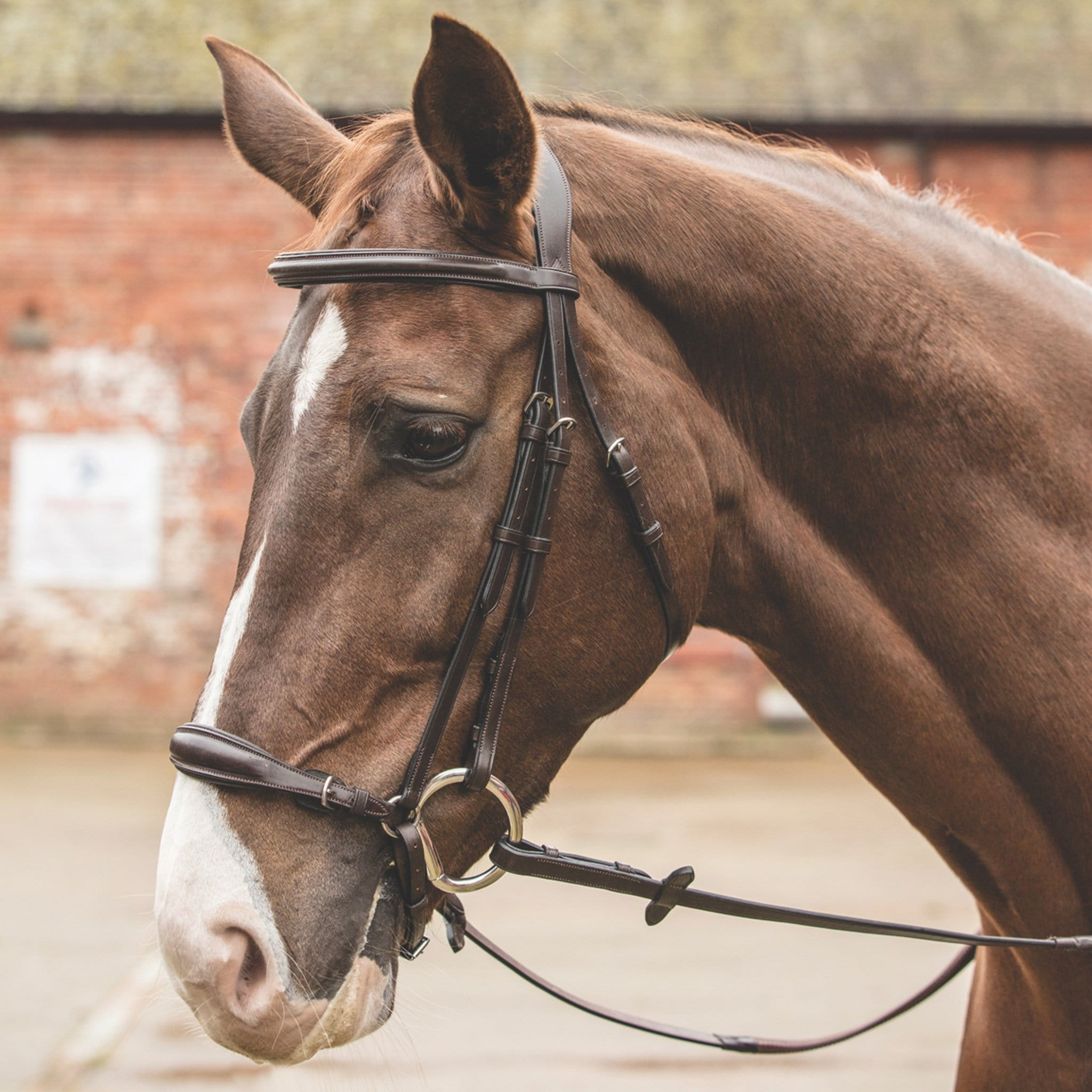 Mark Todd German Drop Noseband Bridle TOD464047