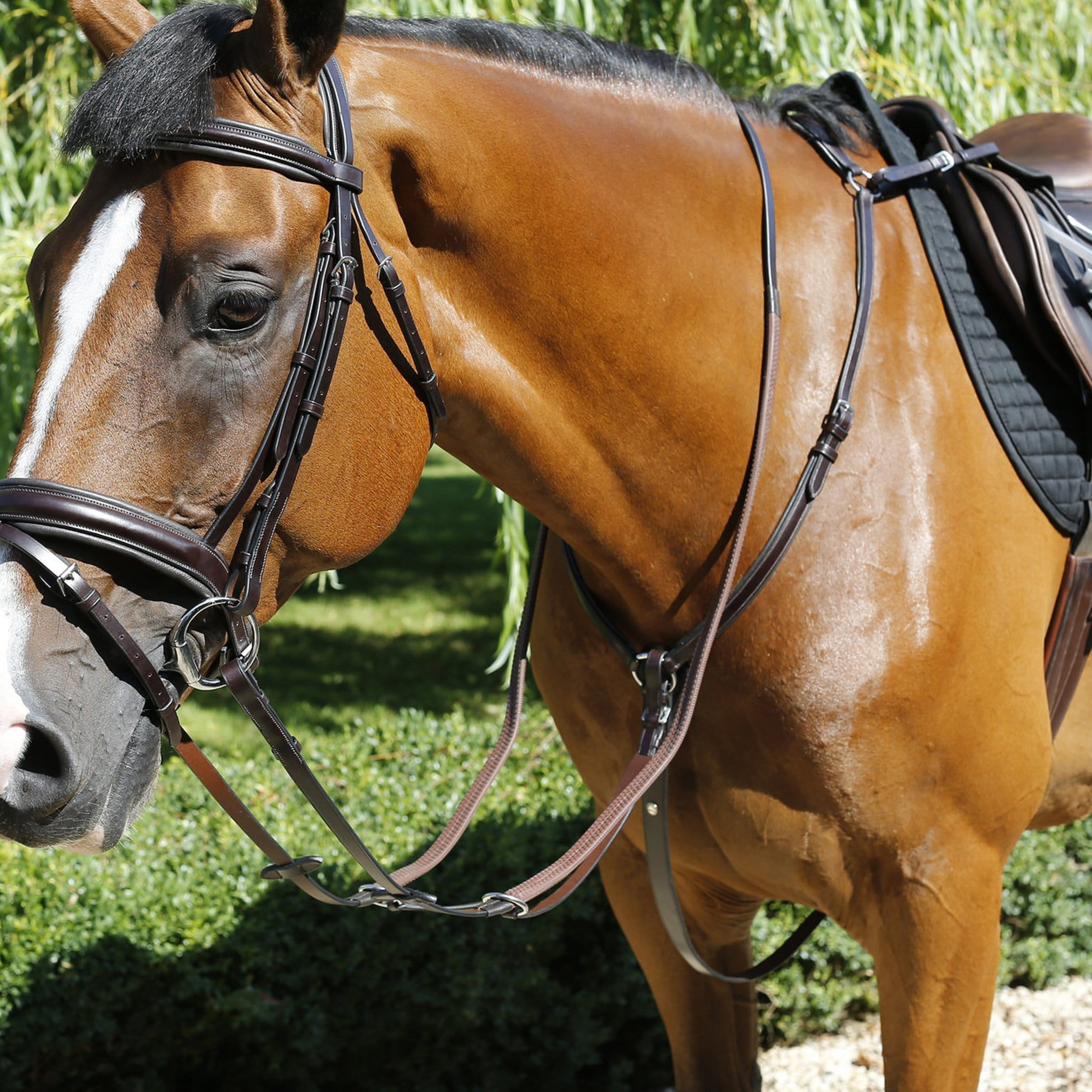 Mark Todd Padded Breastplate TOD893746