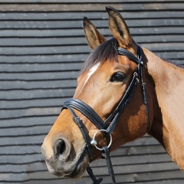 Mark Todd Padded Flash Bridle Black 893293