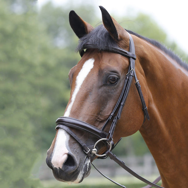 Mark Todd Performance Patent Piped Flash Bridle 893264