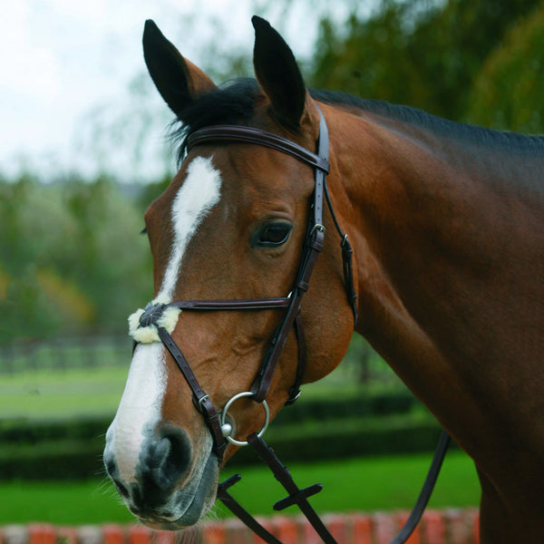 Mark Todd Plain Raised Bridle With Grackle Noseband Havana 884146
