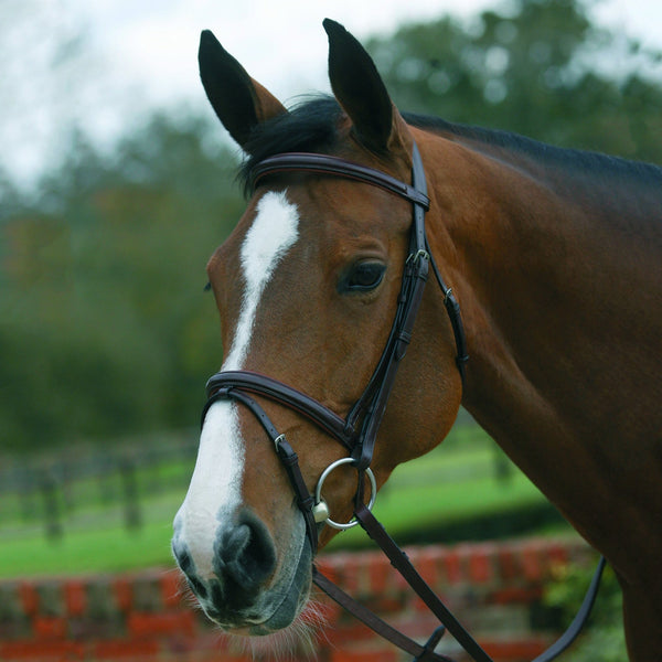 Mark Todd Square Raised Padded Bridle with Flash Noseband Havana 884143