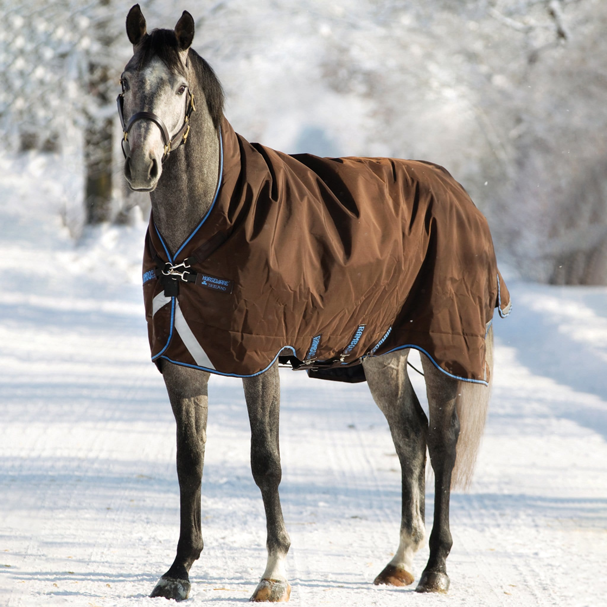 Rambo Wug with Vari-Layer Mediumweight 250g Standard Neck Turnout Rug Brown And Baby Blue On Grey Horse In Snow Standing AAAV32.