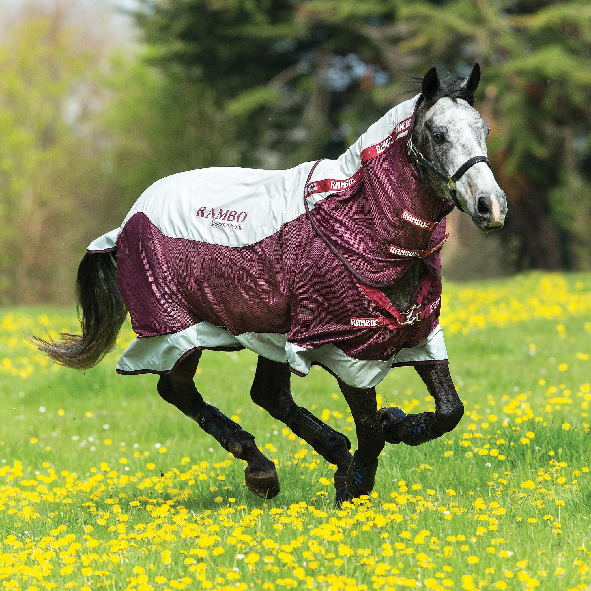 Rambo Summer Series Fly Rug with Detachable Neck Grey and Burgundy AAAA6S