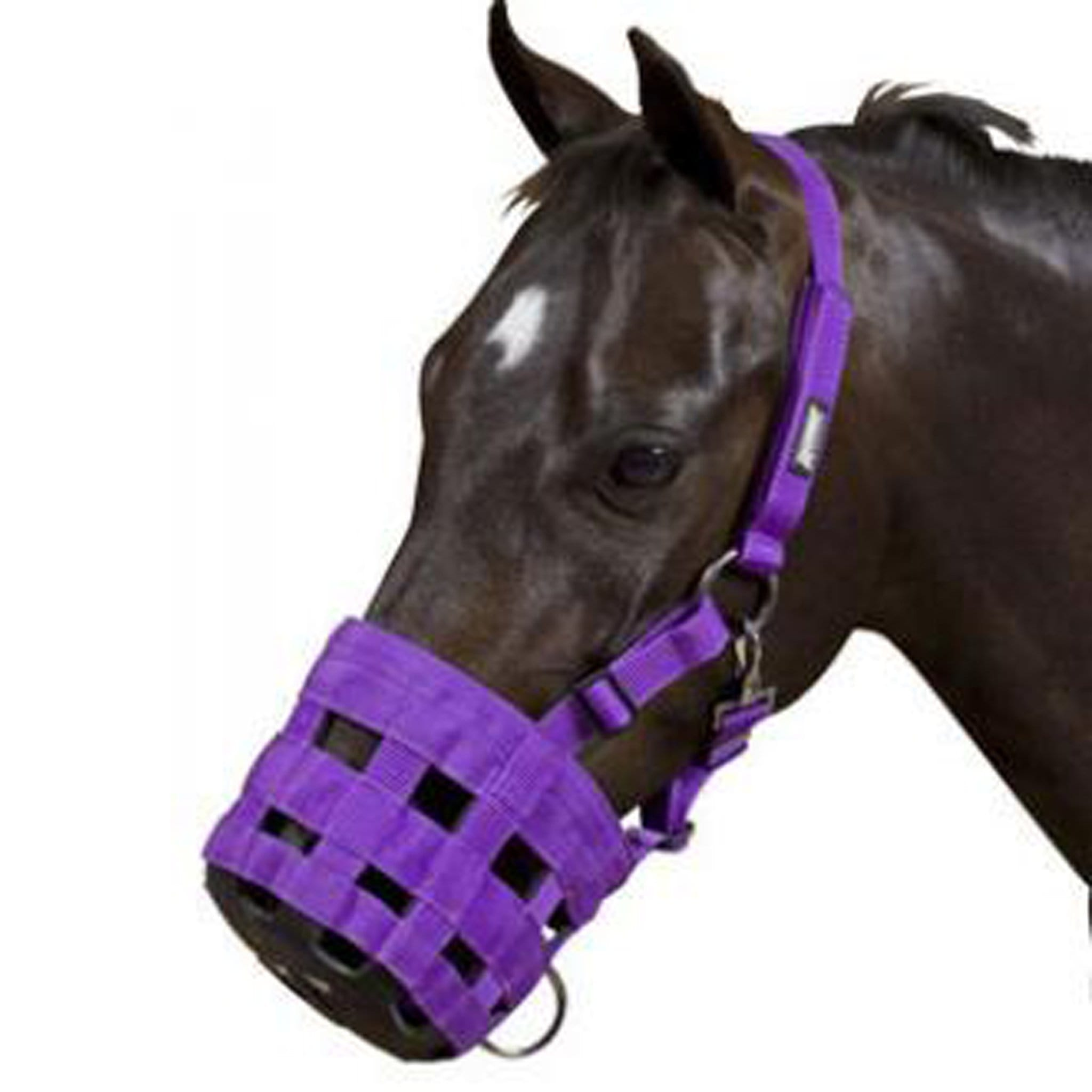 Roma Grazing Muzzle 401379 Purple