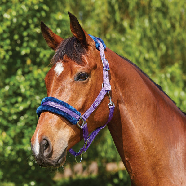 Saxon Element Fleece Headcollar Purple and Navy 811846