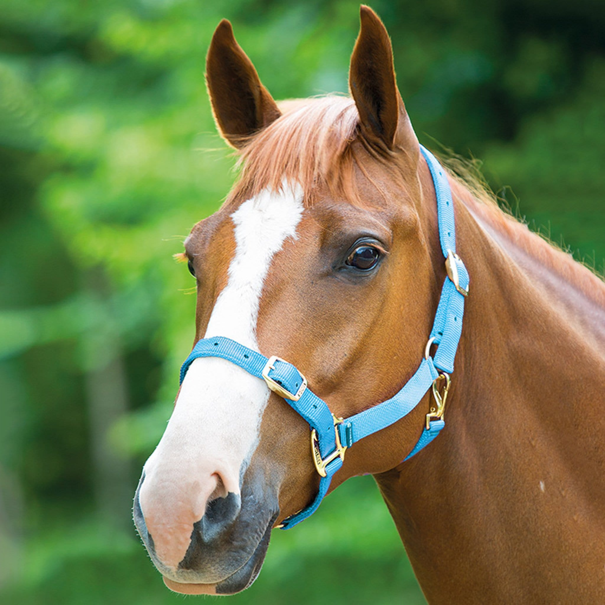 Shires Adjustable Headcollar Baby Blue 384B.