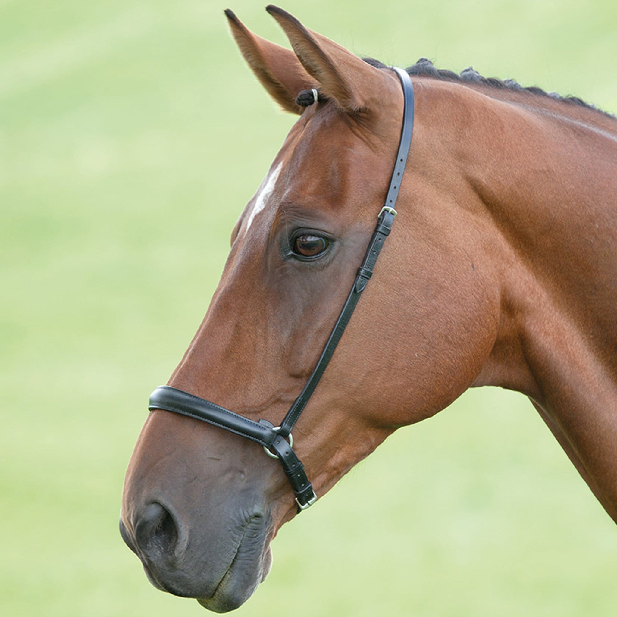 Shires Blenheim Drop Noseband 345G.
