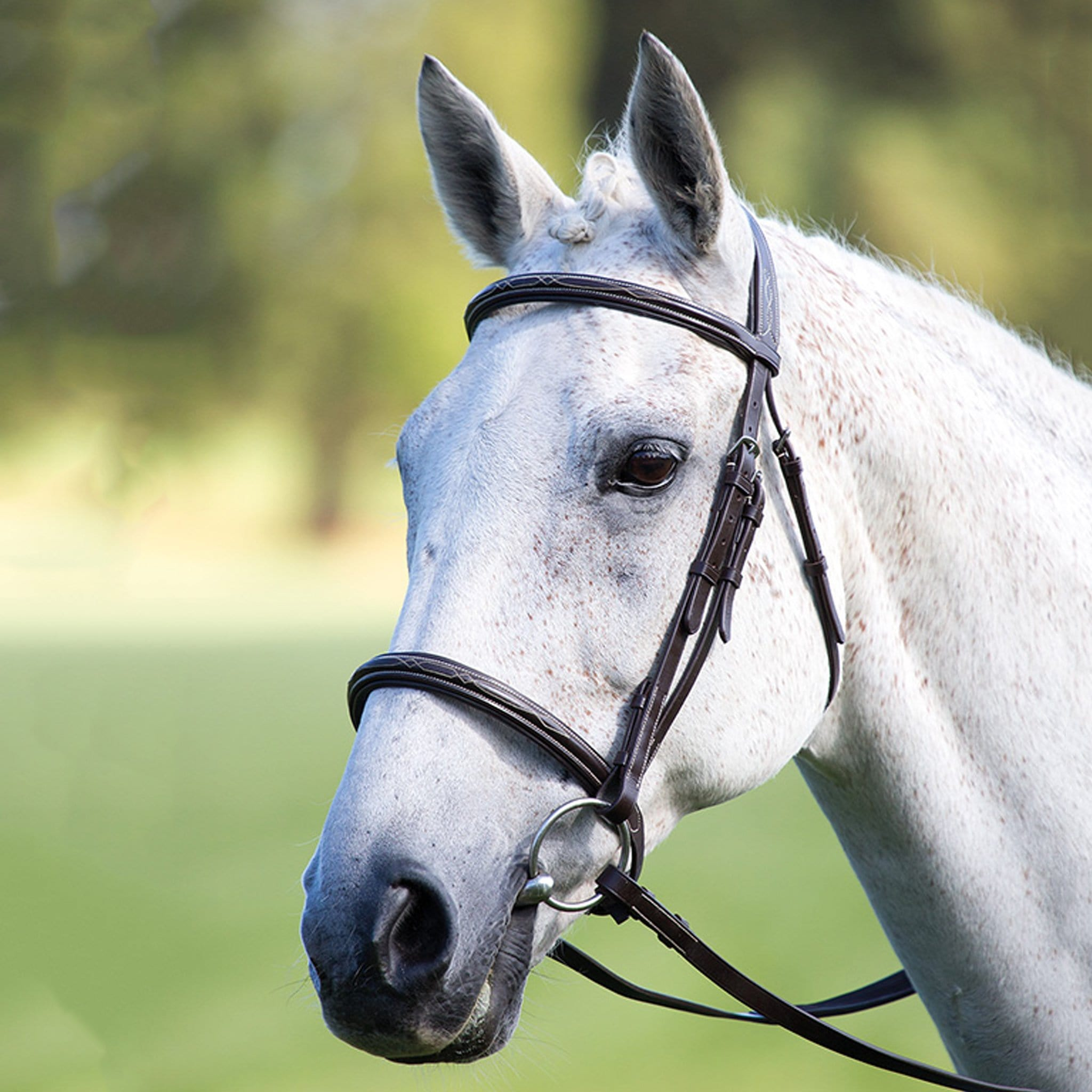 Shires Avignon Padded Raised Cavesson Bridle Black 3921