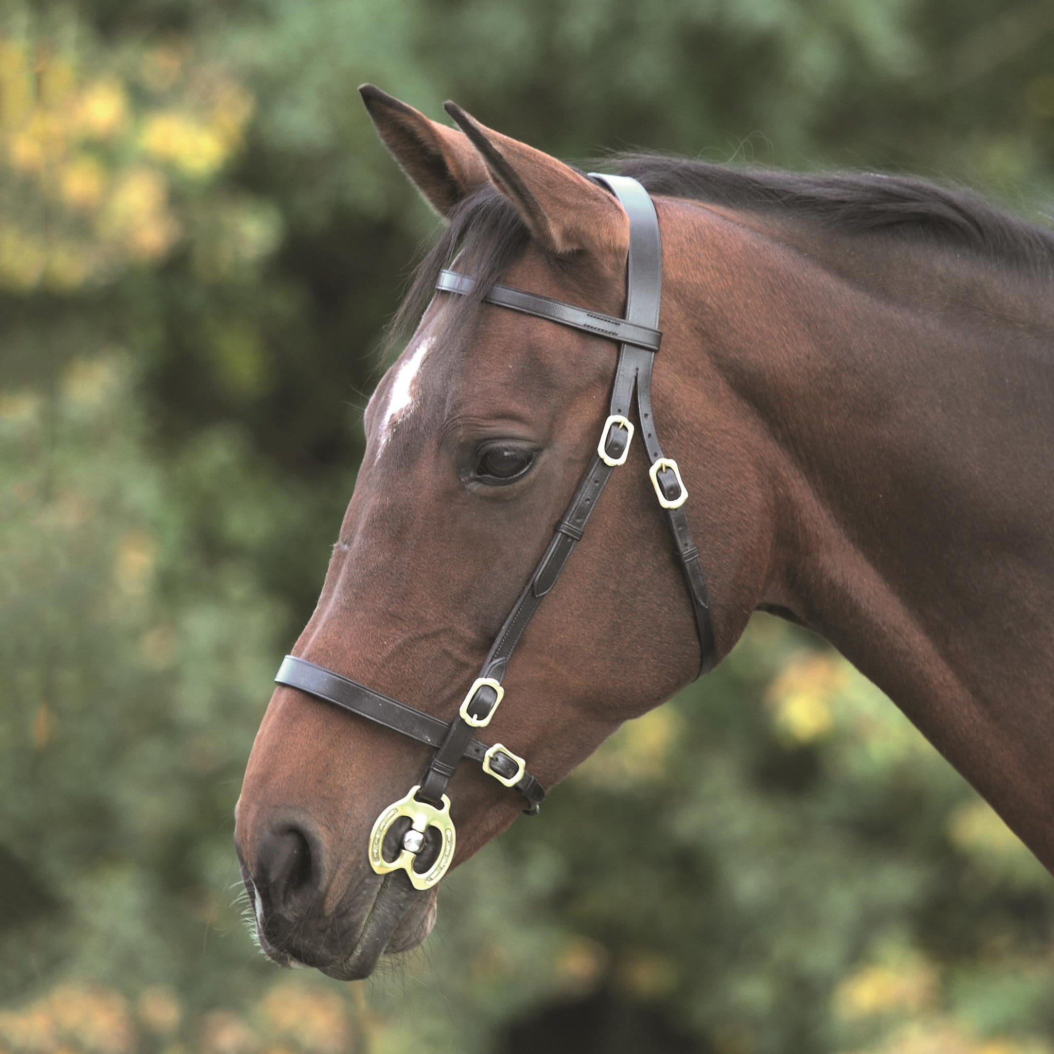 Shires Blenheim Plain Inhand Bridle 4135
