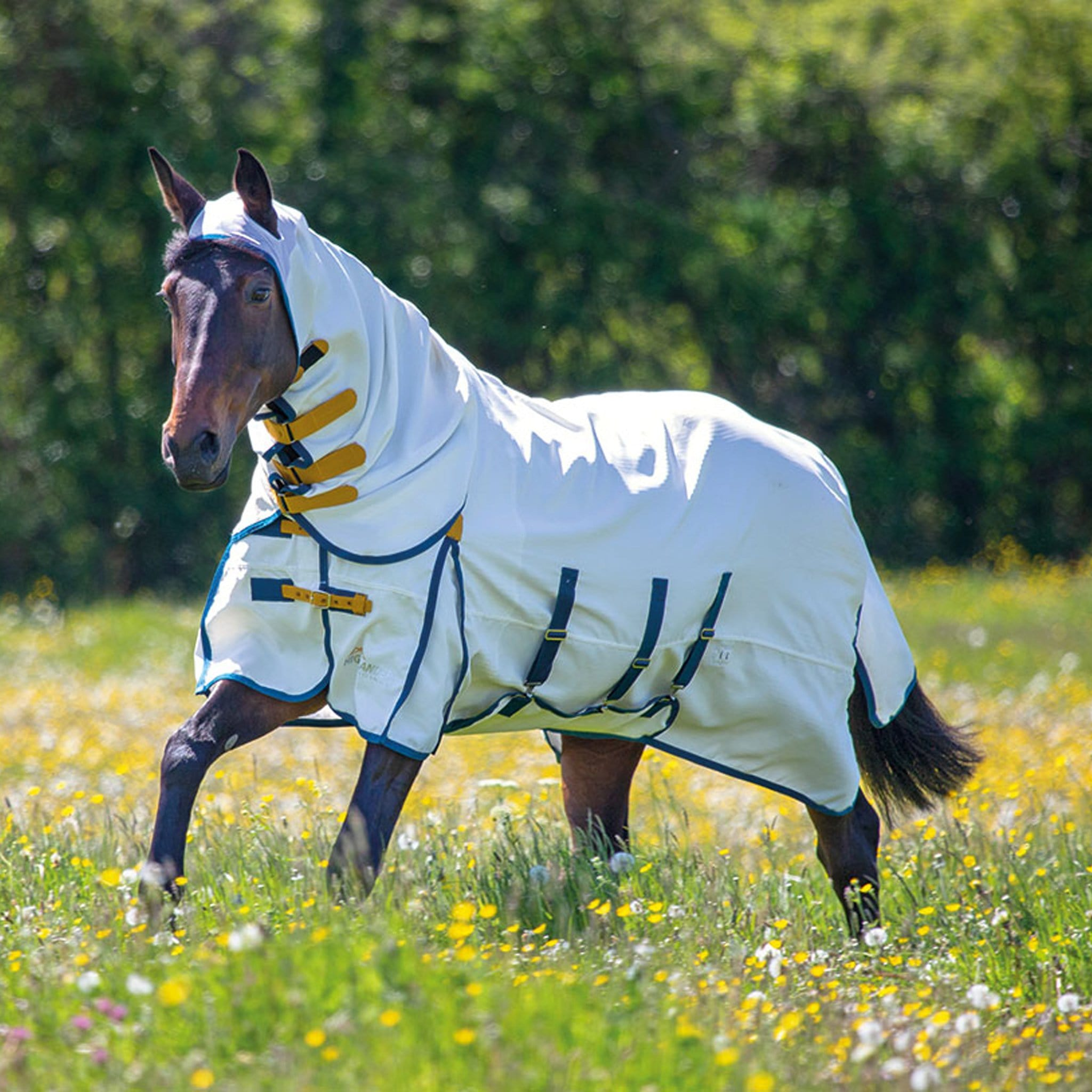 Shires Highlander Plus Sweet-Itch Combo Fly Rug 9321 With Poll Coverage White With Blue And Yellow Trim Horse Cantering