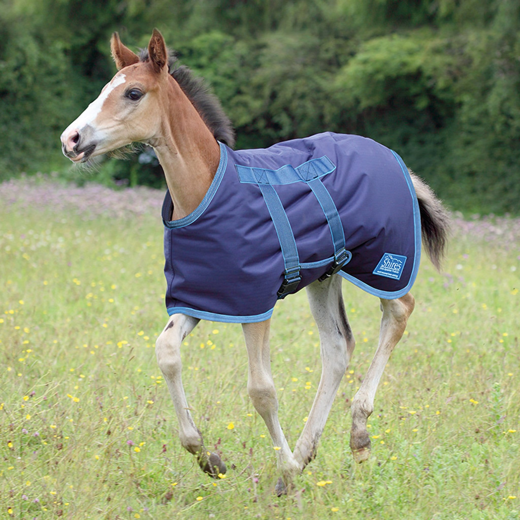Shires Tempest Foal Rug 46