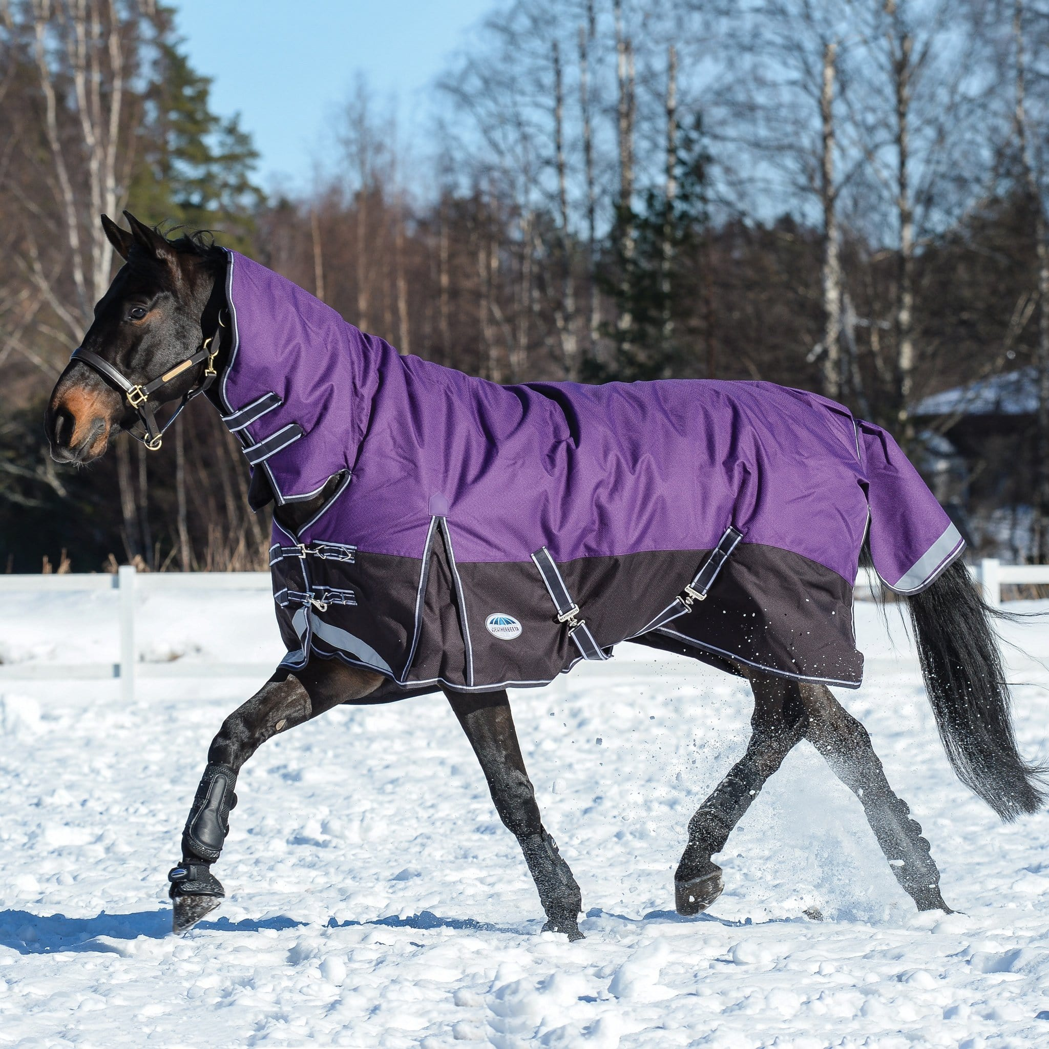 Weatherbeeta ComFiTec Plus Dynamic Heavyweight Combo Neck Turnout Rug Purple Trotting in the Snow 801164