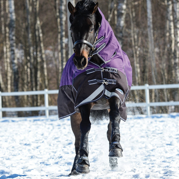 Weatherbeeta ComFiTec Plus Dynamic Heavyweight Combo Turnout Rug Purple Playing in the Snow Front View 801164