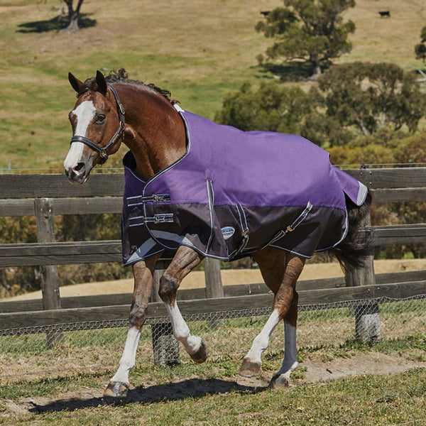Weatherbeeta ComFiTec Plus Dynamic Lite Standard Neck Turnout Rug Purple and Black 801339