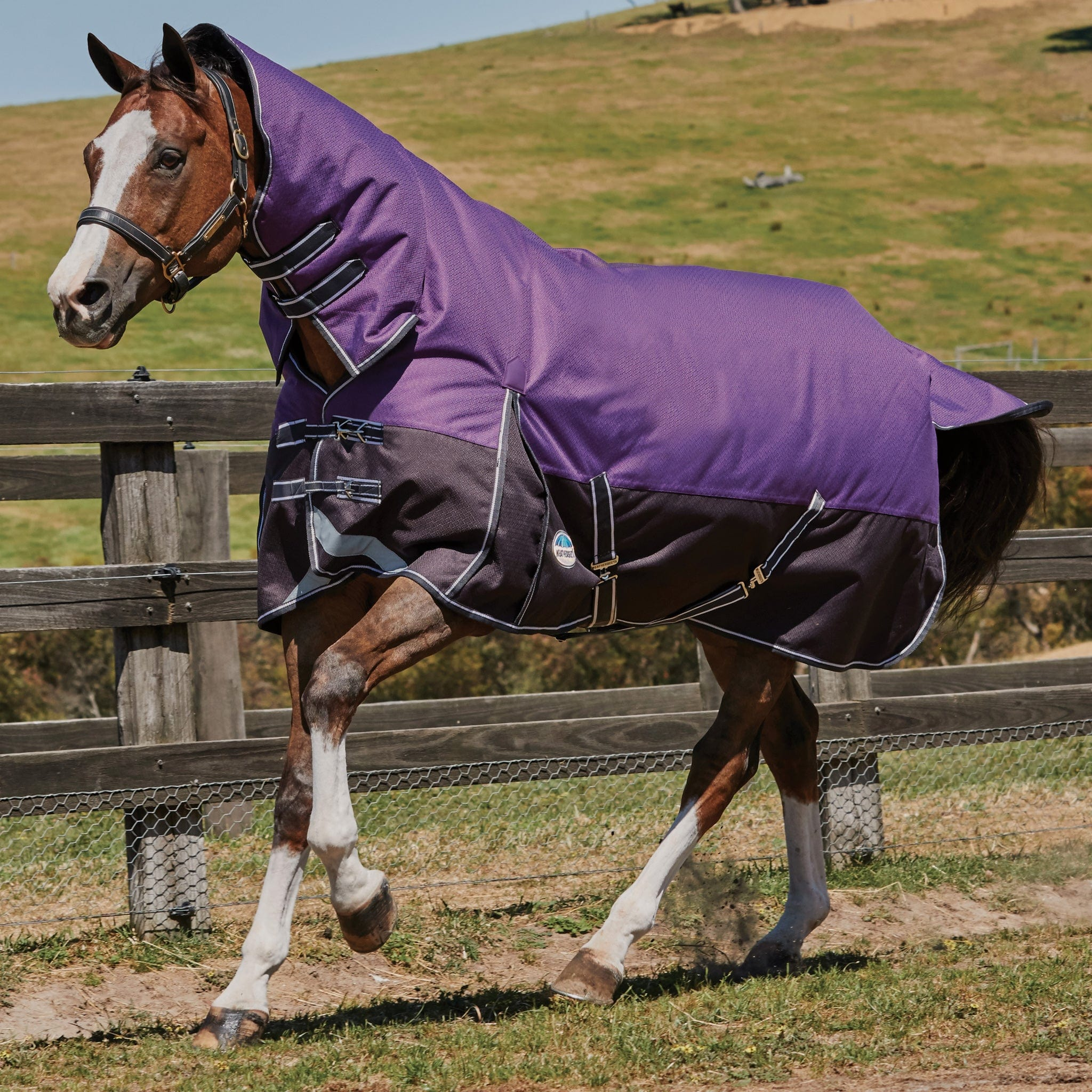 Weatherbeeta ComFiTec Plus Dynamic Medium Lightweight 100g Combo Neck Turnout Rug Purple and Black 801229