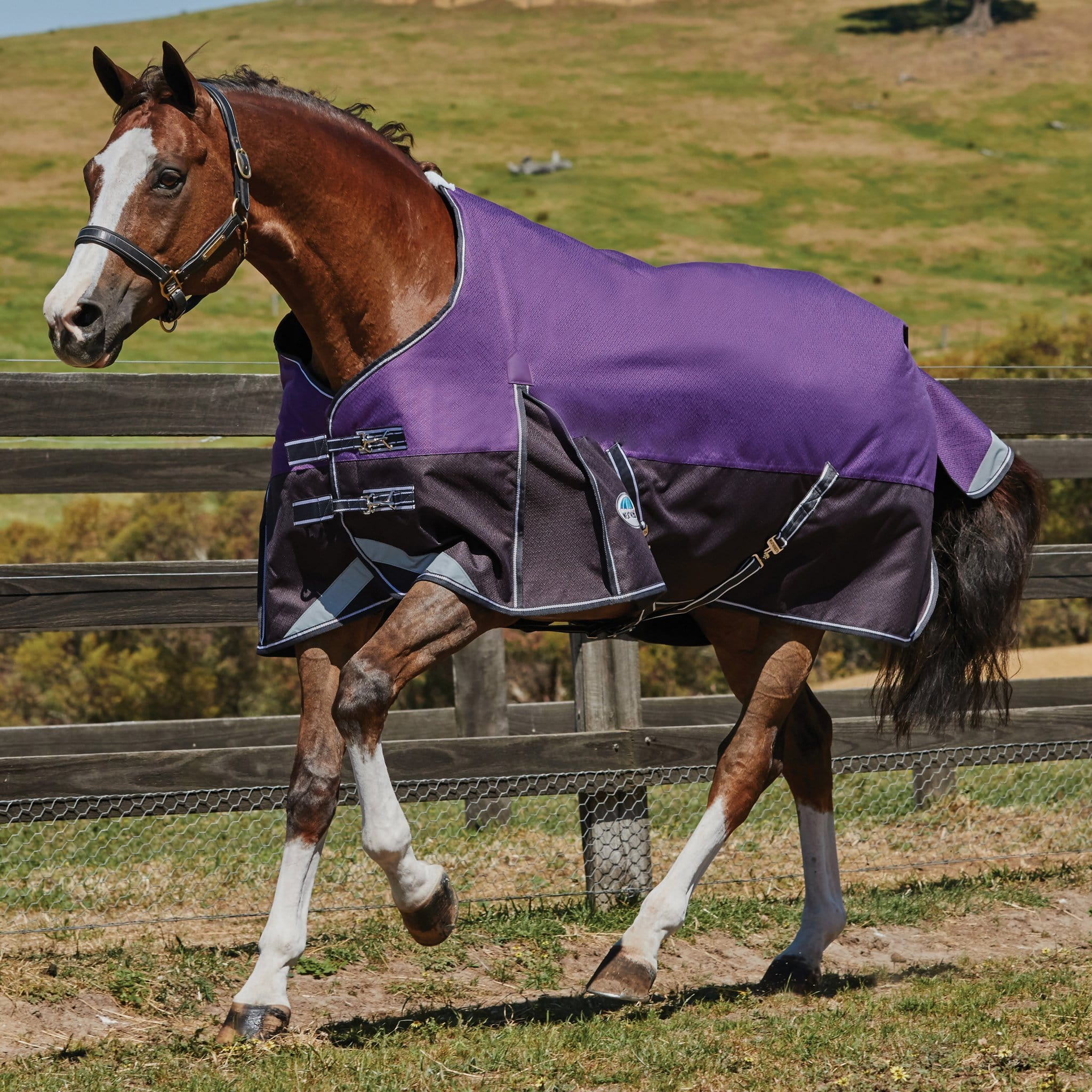 Weatherbeeta ComFiTec Plus Dynamic Medium Lightweight 100g Standard Turnout Rug 801317