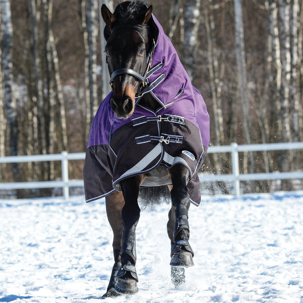 Weatherbeeta ComFiTec Plus Dynamic Mediumweight Combo Turnout Rug Purple & Black Playing in the Snow 801193