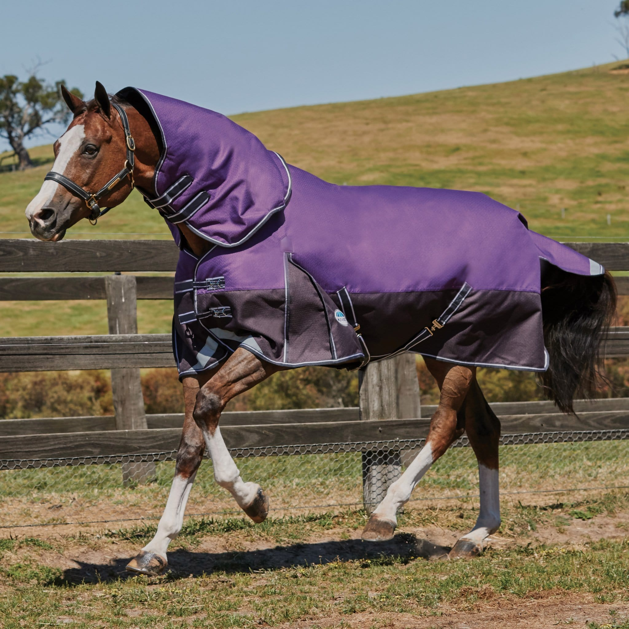 Weatherbeeta ComFiTec Plus Dynamic Mediumweight Detachable Neck Turnout Rug Purple 803380