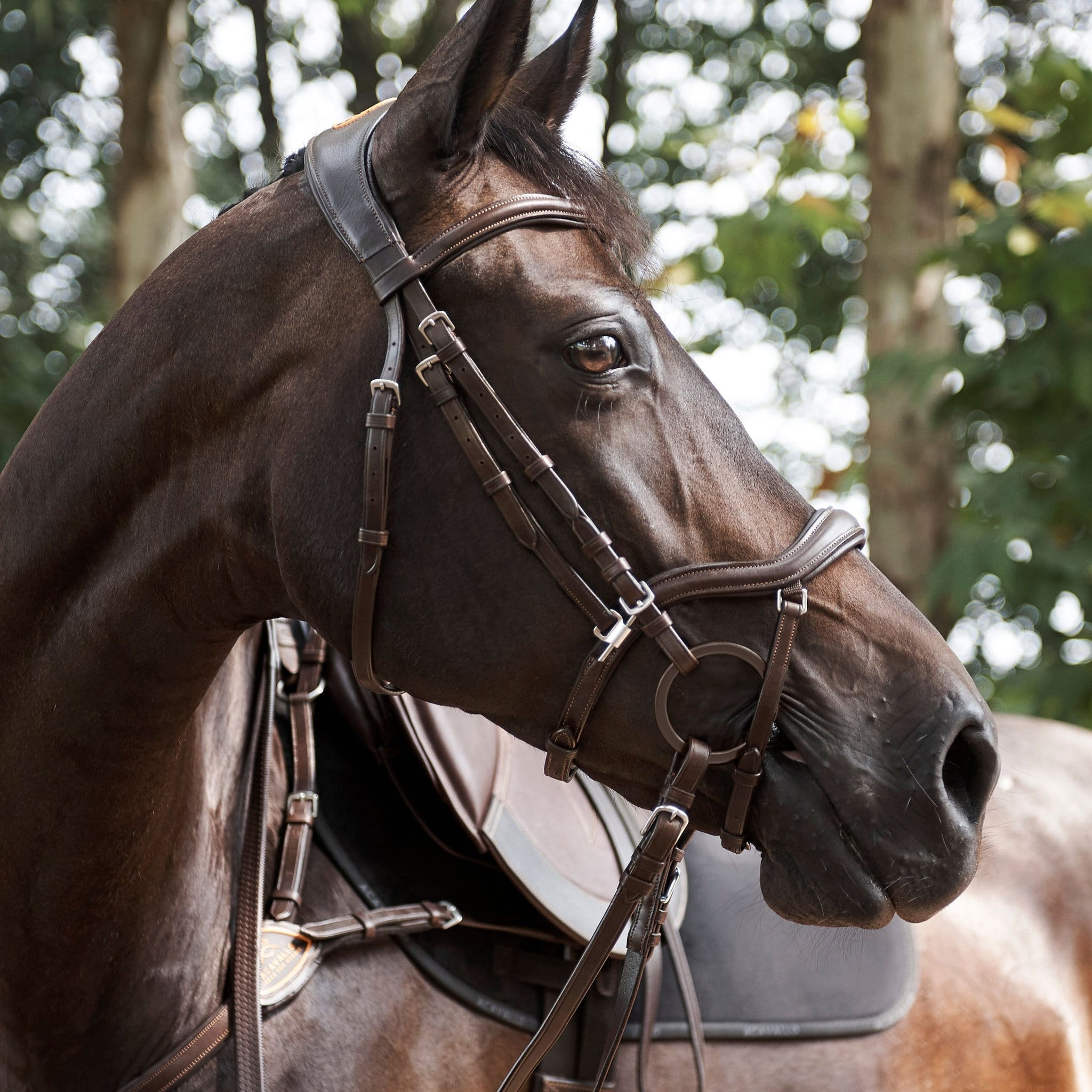 Acavallo Allegoria Bridle 5132 Brown On Bay Horse