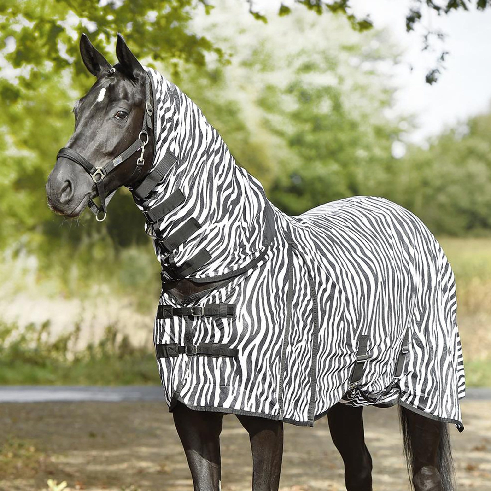 Busse Paddock Comfort Zebra Fly Sheet 603141 Full Shot