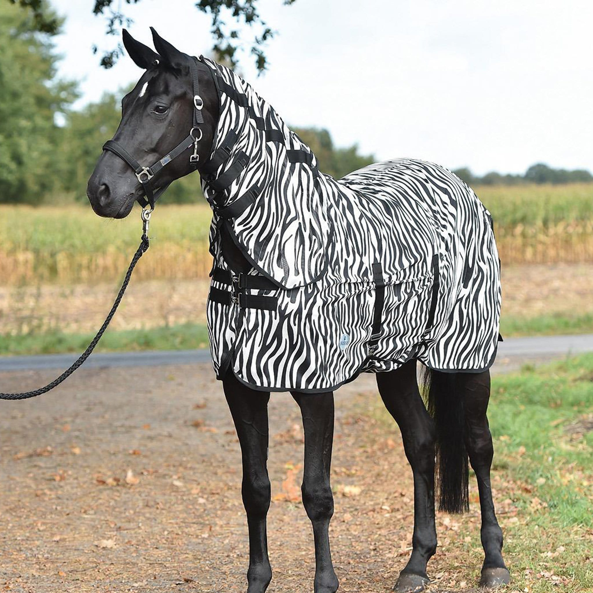 Busse Paddock Comfort Zebra Fly Sheet With Detachable Neck Cover 603601 With Neck Cover From Front