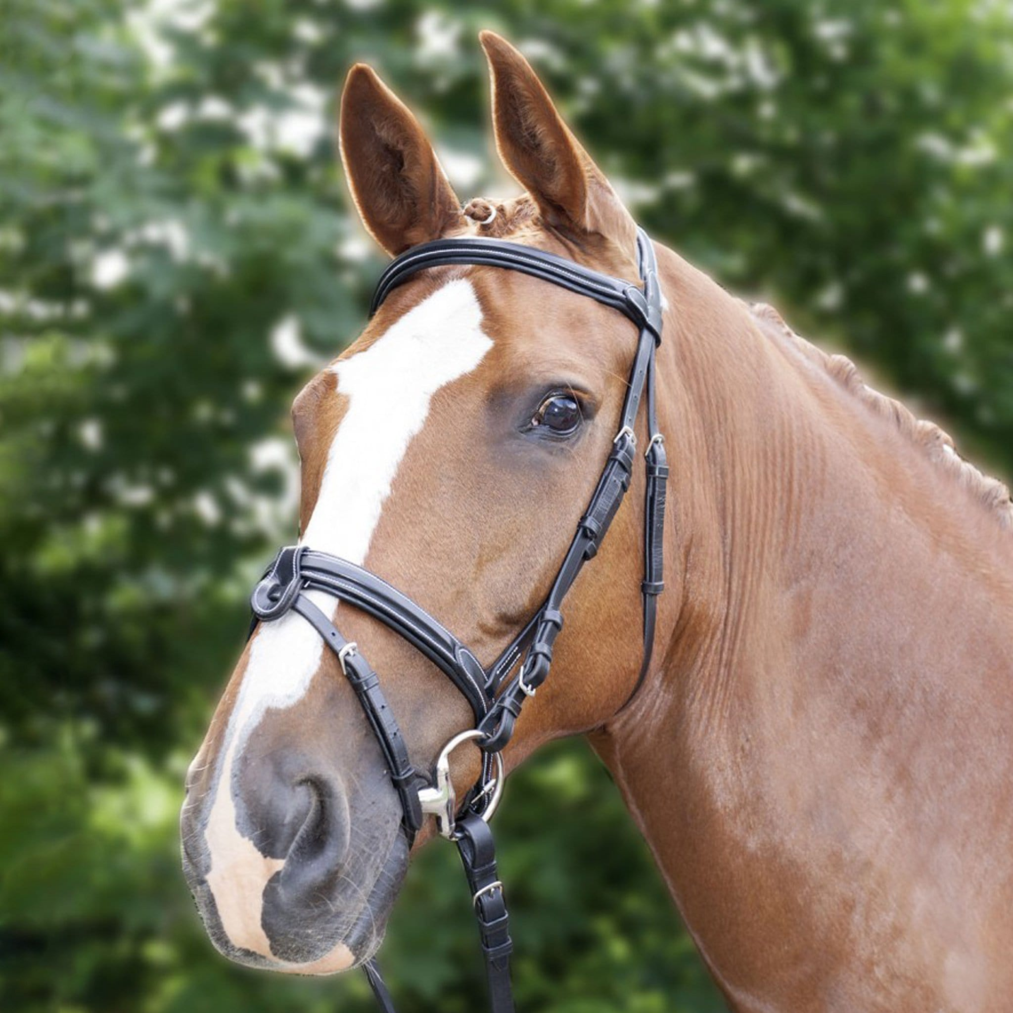 HKM Charlotte Bridle With Gel Padding 11137 Brown On Horse