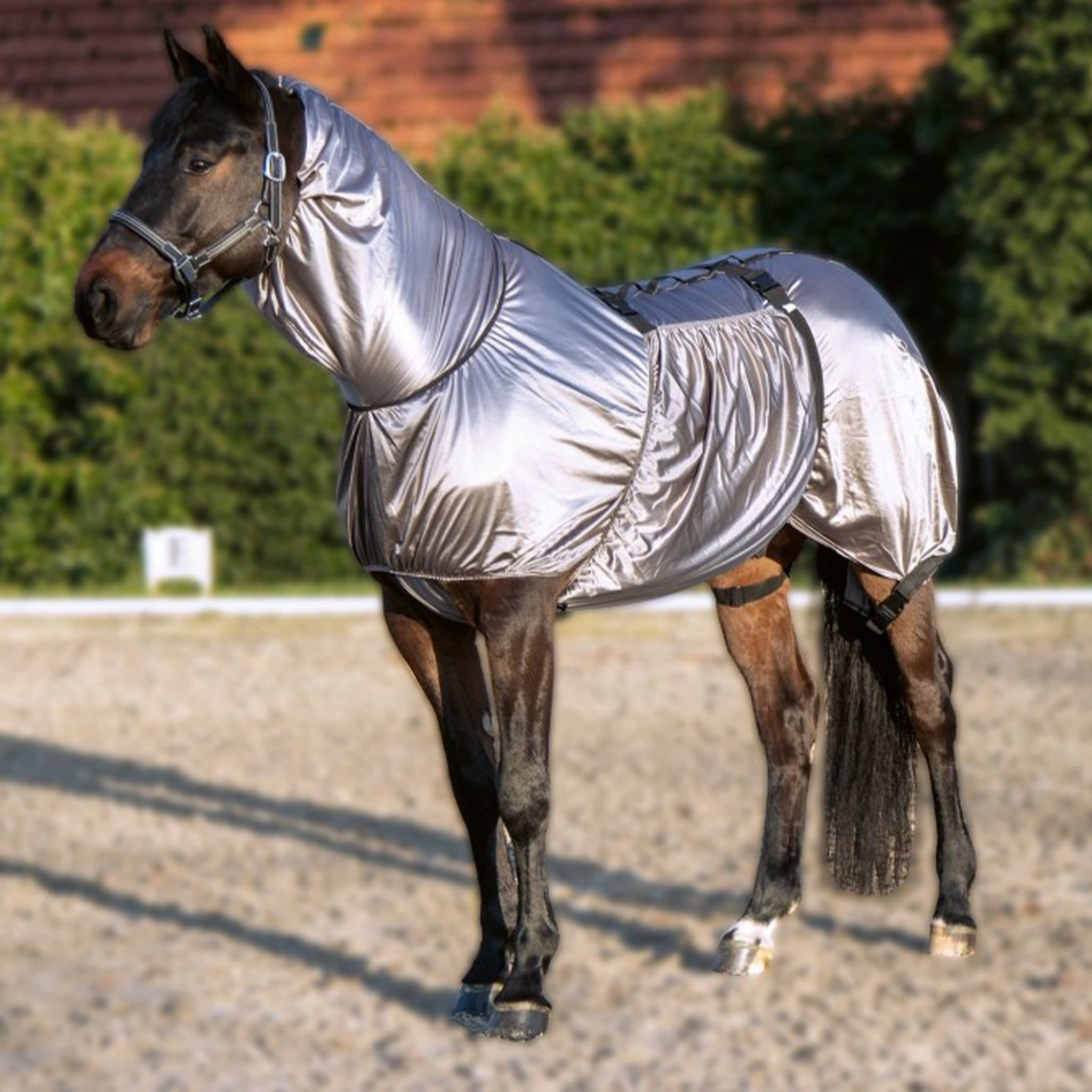 HKM Security Eczema Combo Fly Rug 7045 On Horse In School