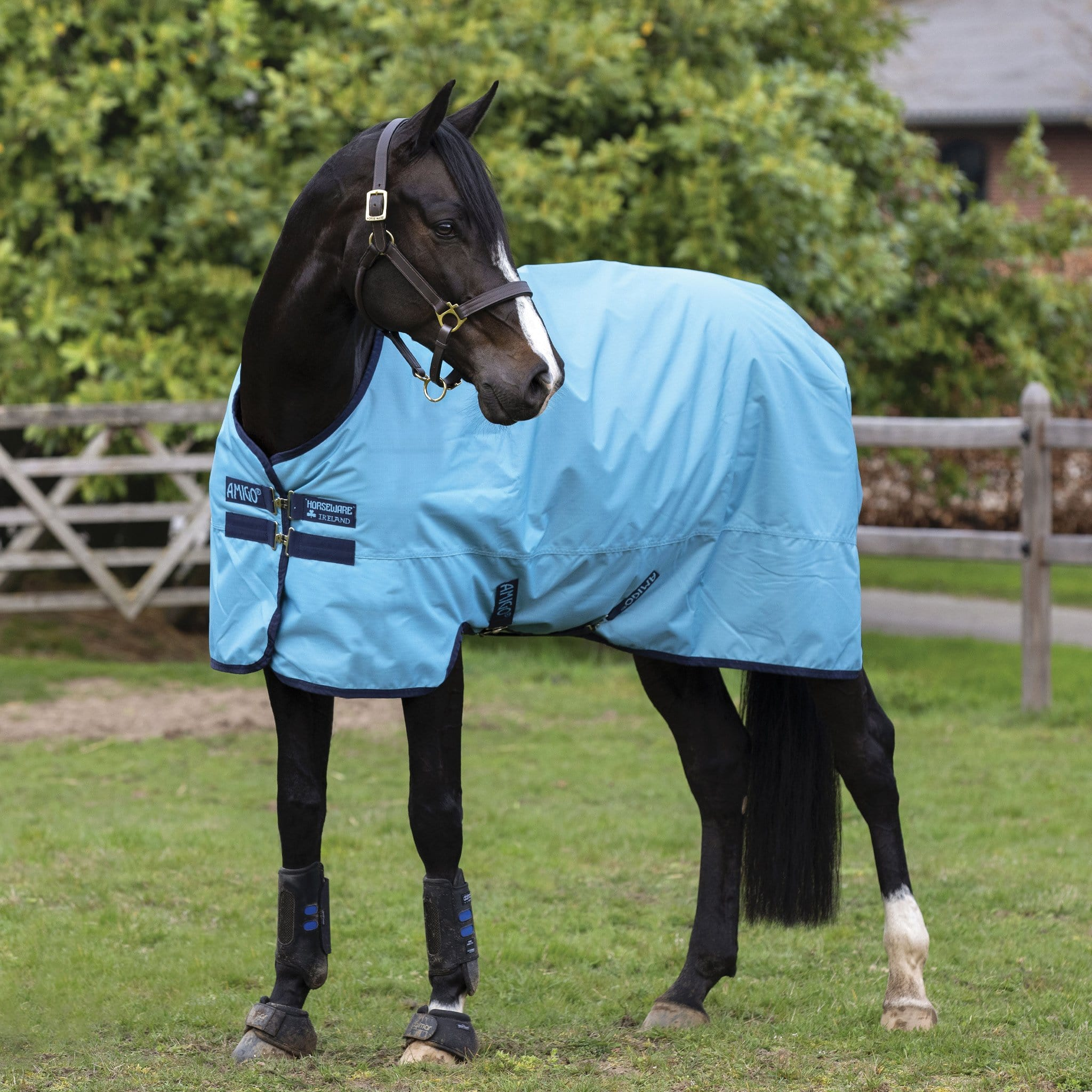 Amigo Hero Ripstop Lightweight 50g Standard Turnout Rug Light Blue and Navy AAPA91