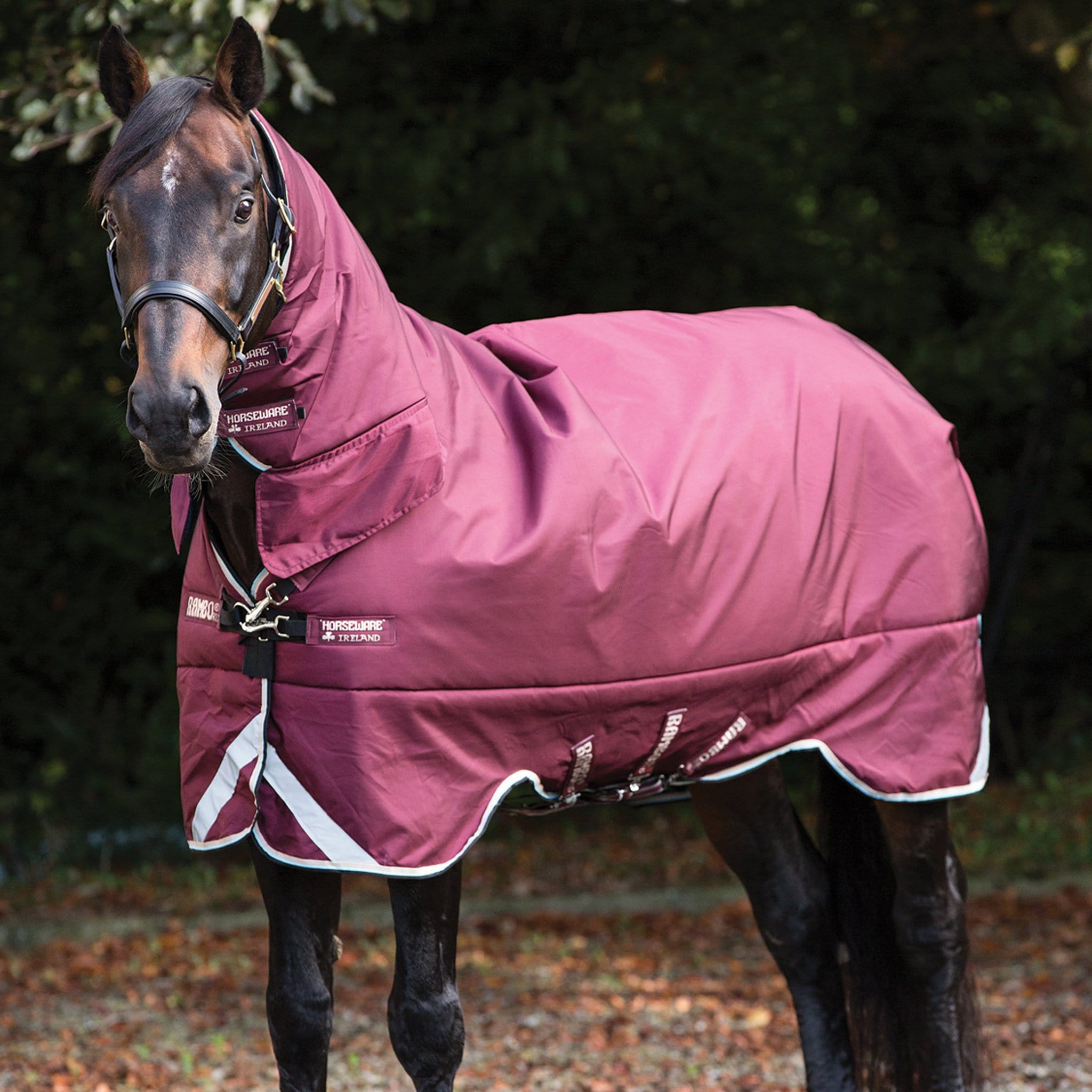 Rambo All in one heavyweight 400g combo turnout rug AAAP93