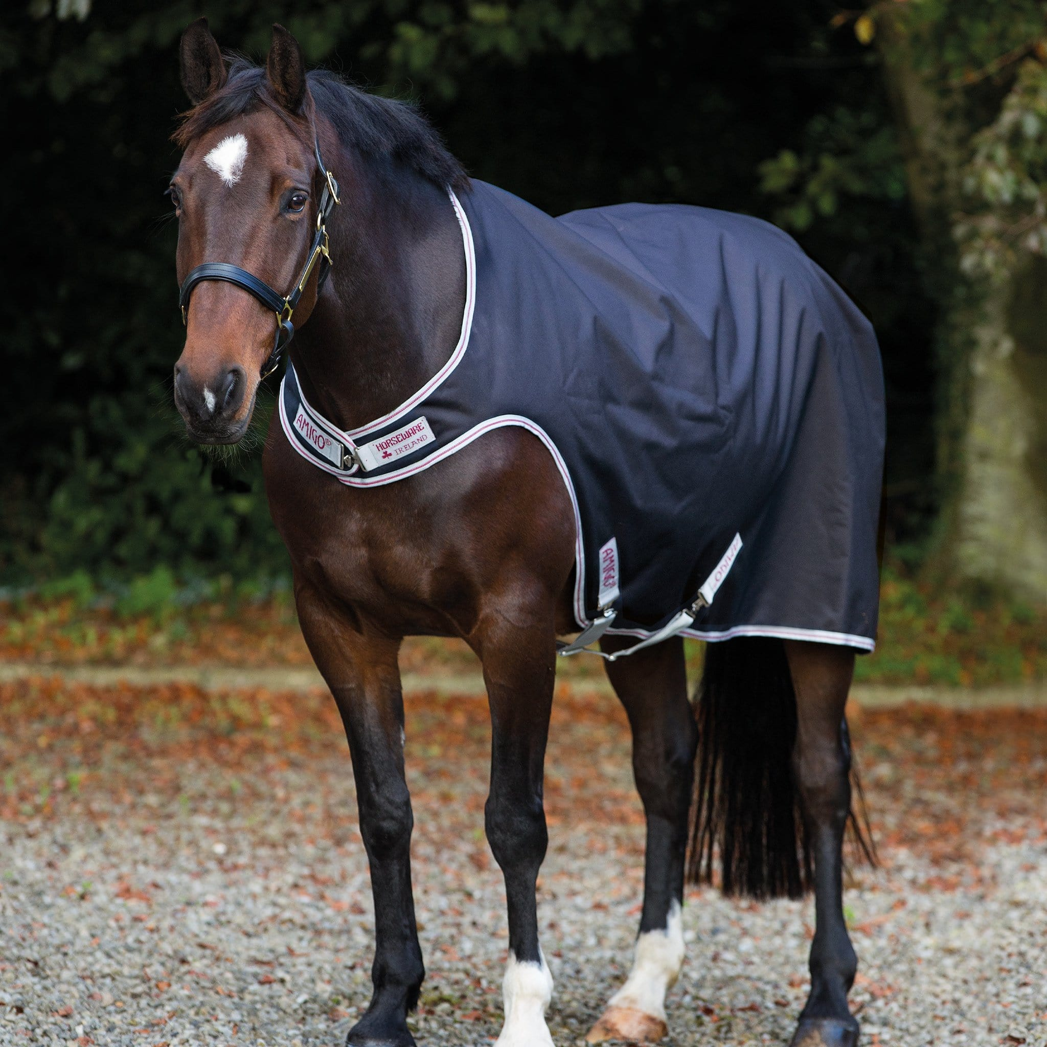Rambo Lightweight 100g Walker Rug Black AGRW41
