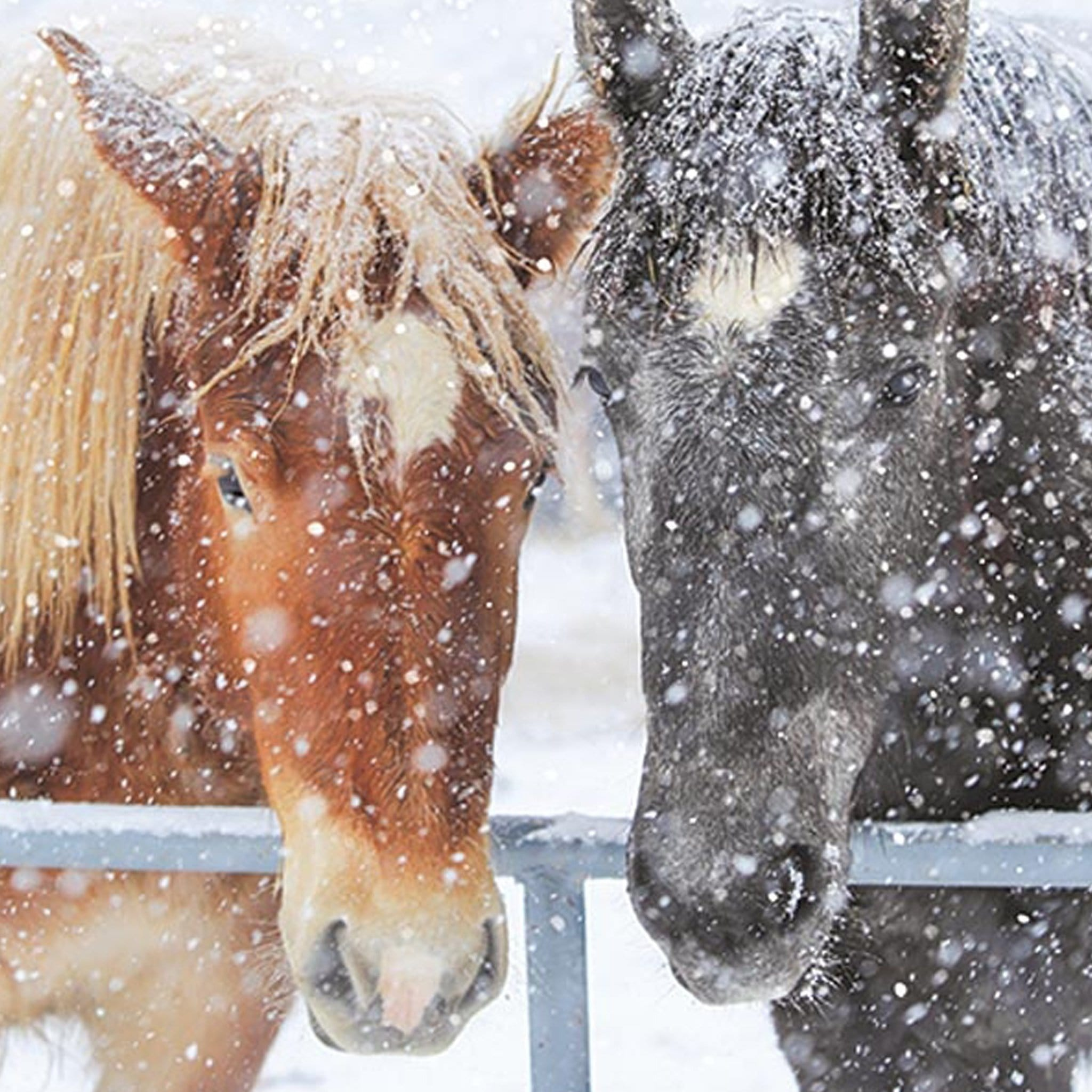 Horses In The Snow Christmas Card 6 Pack