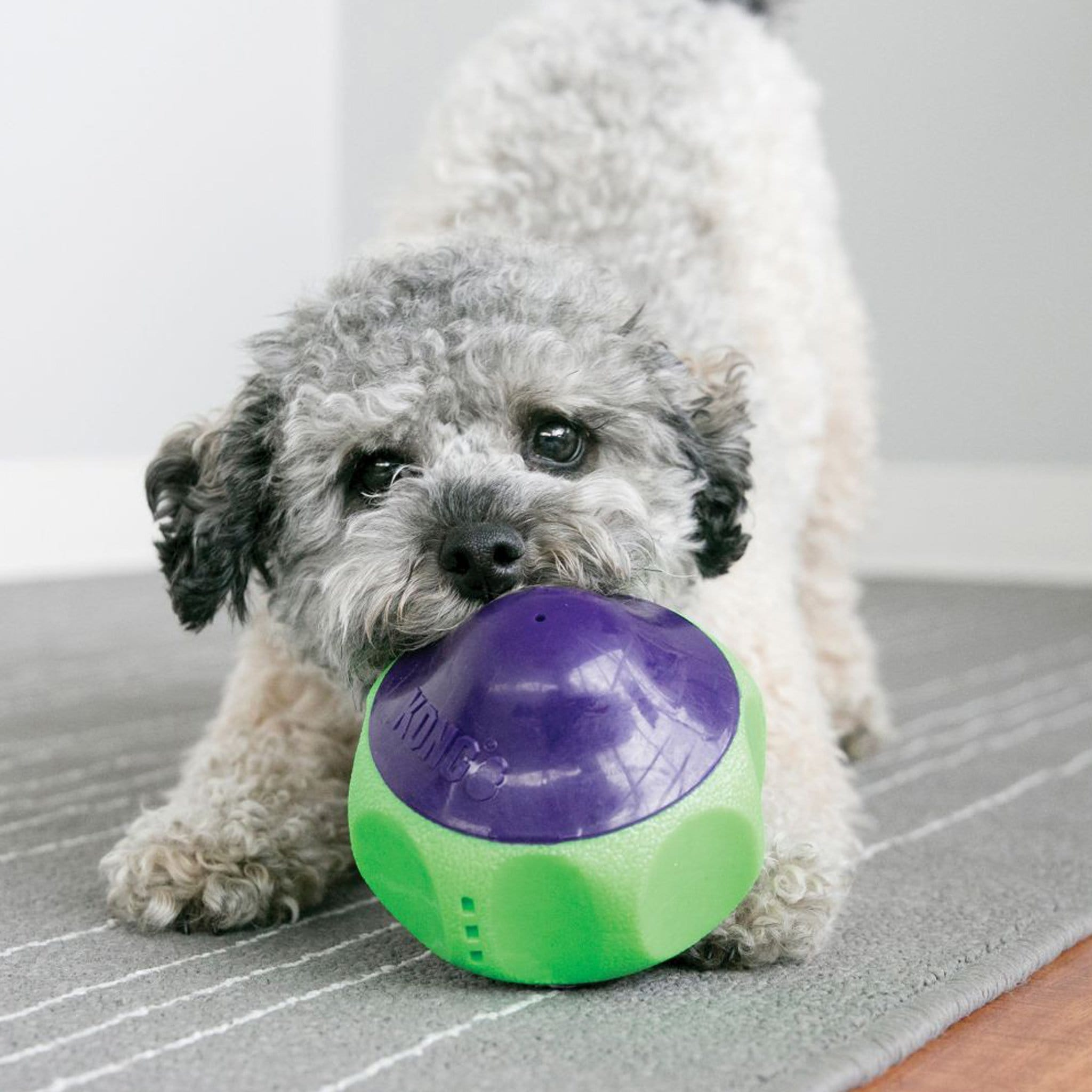 Kong Babbler KON0055 Purple Green Dog
