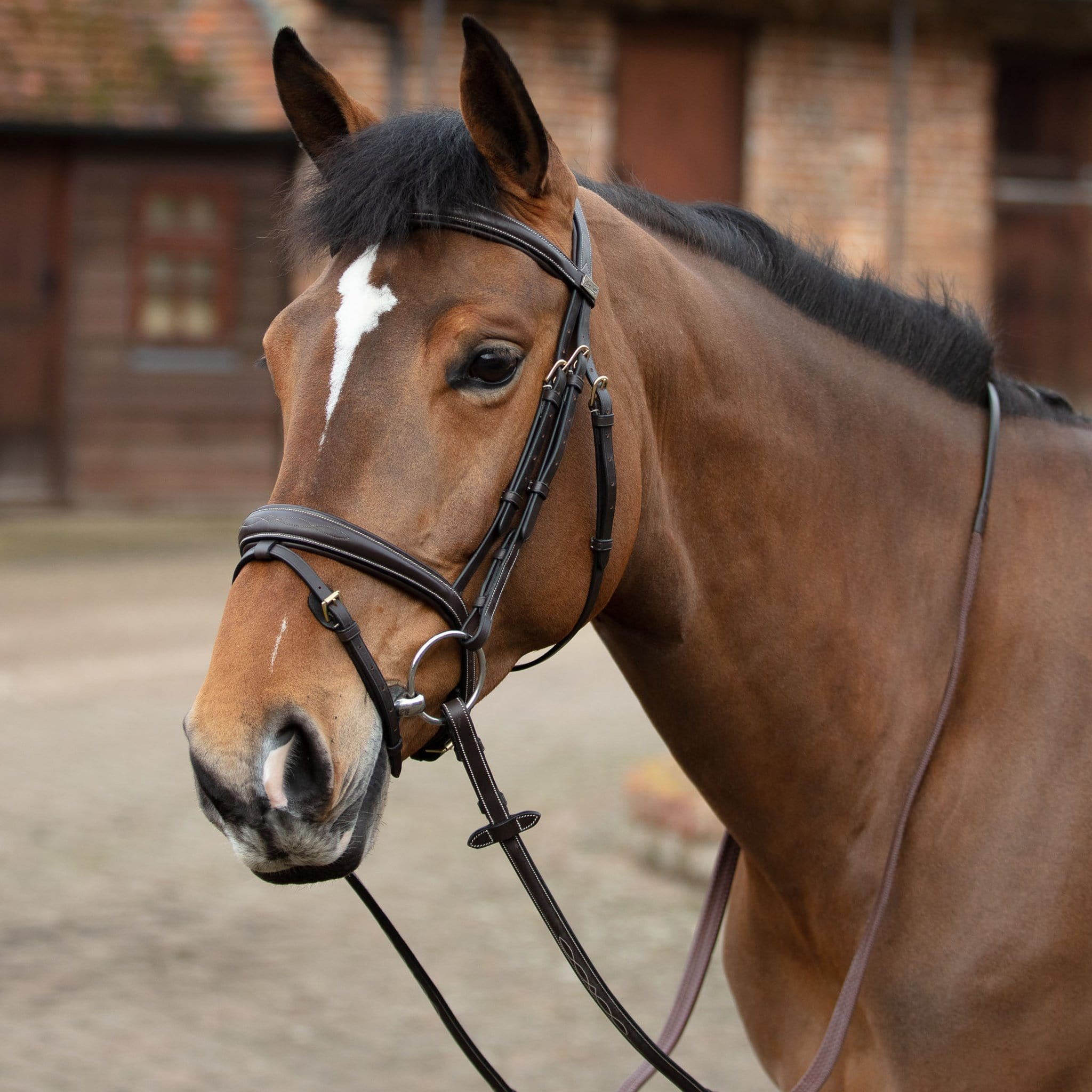 Mark Todd Raised Contrast Stitch Bridle Black Side TOD464039