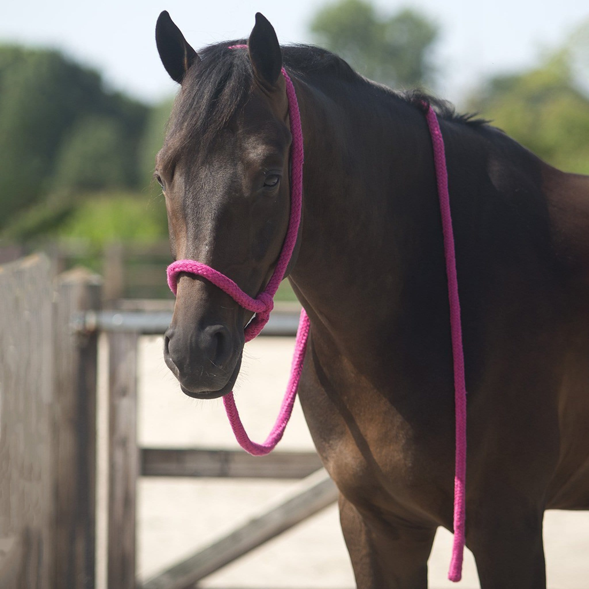 QHP Lead Halter 1670 Fuchsia On Horse