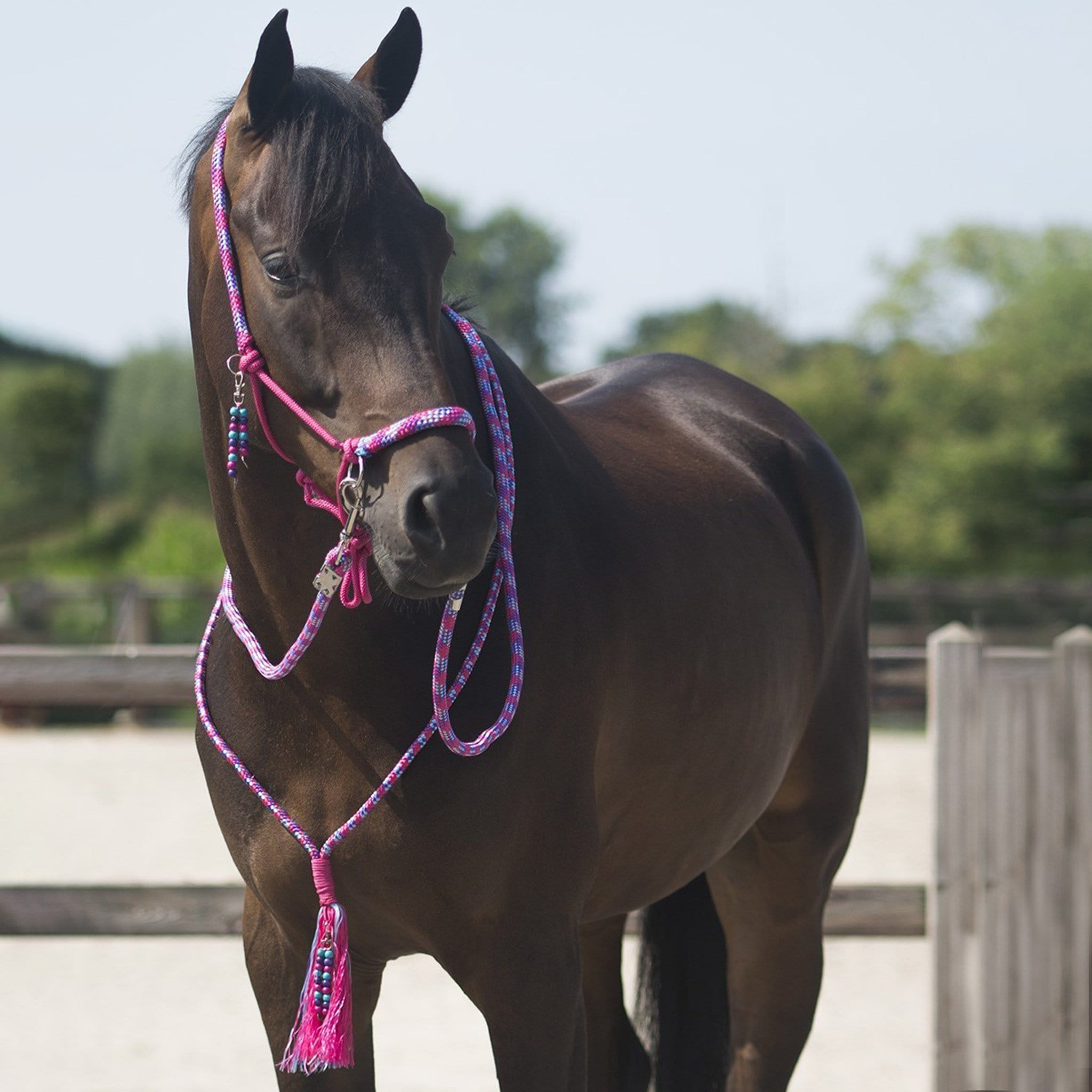 QHP Liberty Rope Halter Combi 1096 Fuchsia On Horse