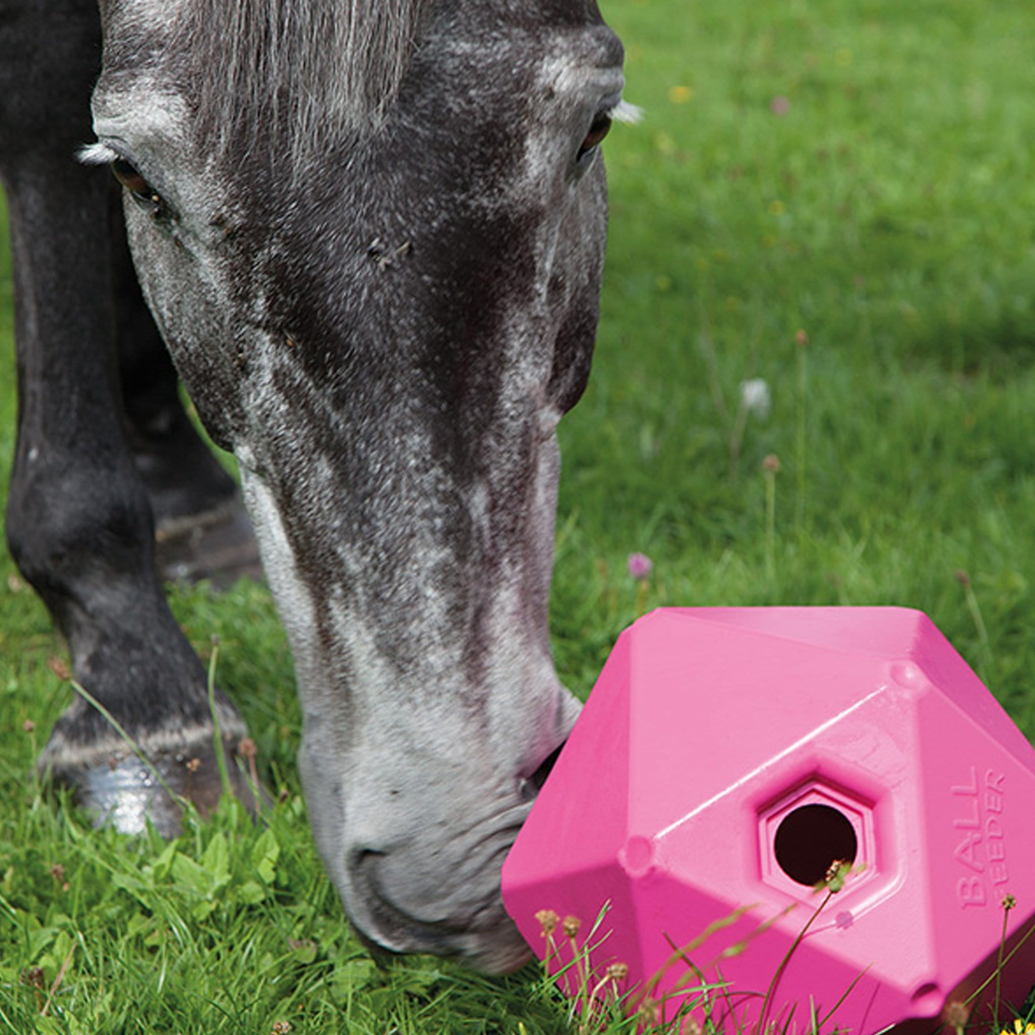 Shires Ball Feeder 9640 Pink With Horse In Field