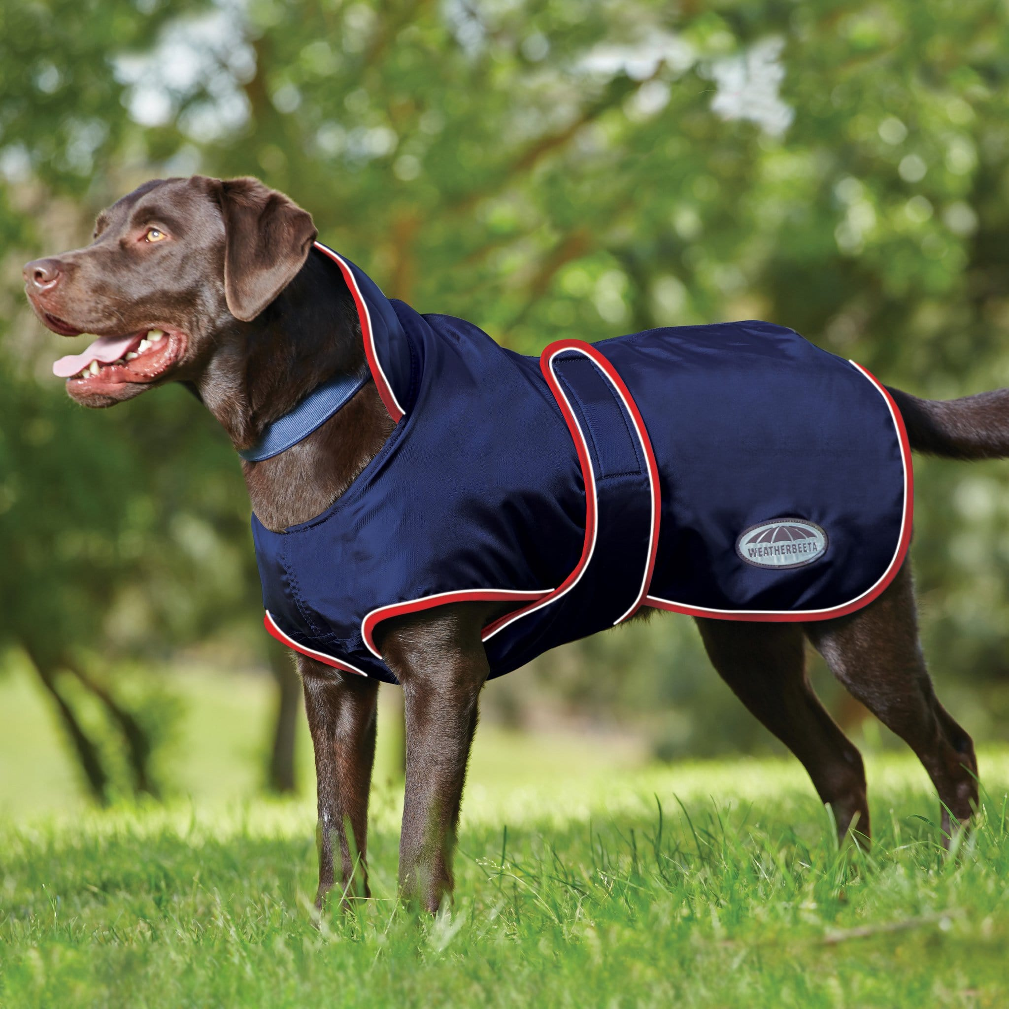 Weatherbeeta ComFiTec Windbreaker 420D Deluxe Dog Coat On Dog Navy/Red/White 646817.
