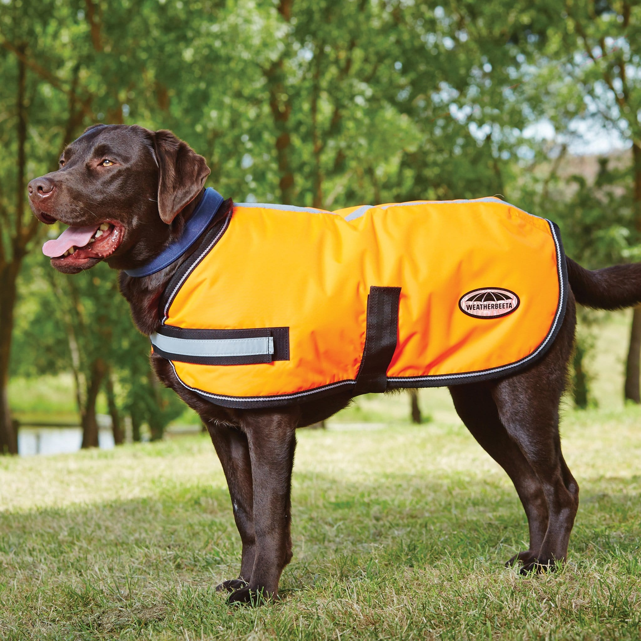 Weatherbeeta ComFiTec Reflective Parka 300D Dog Coat Orange On Dog 1001720001.