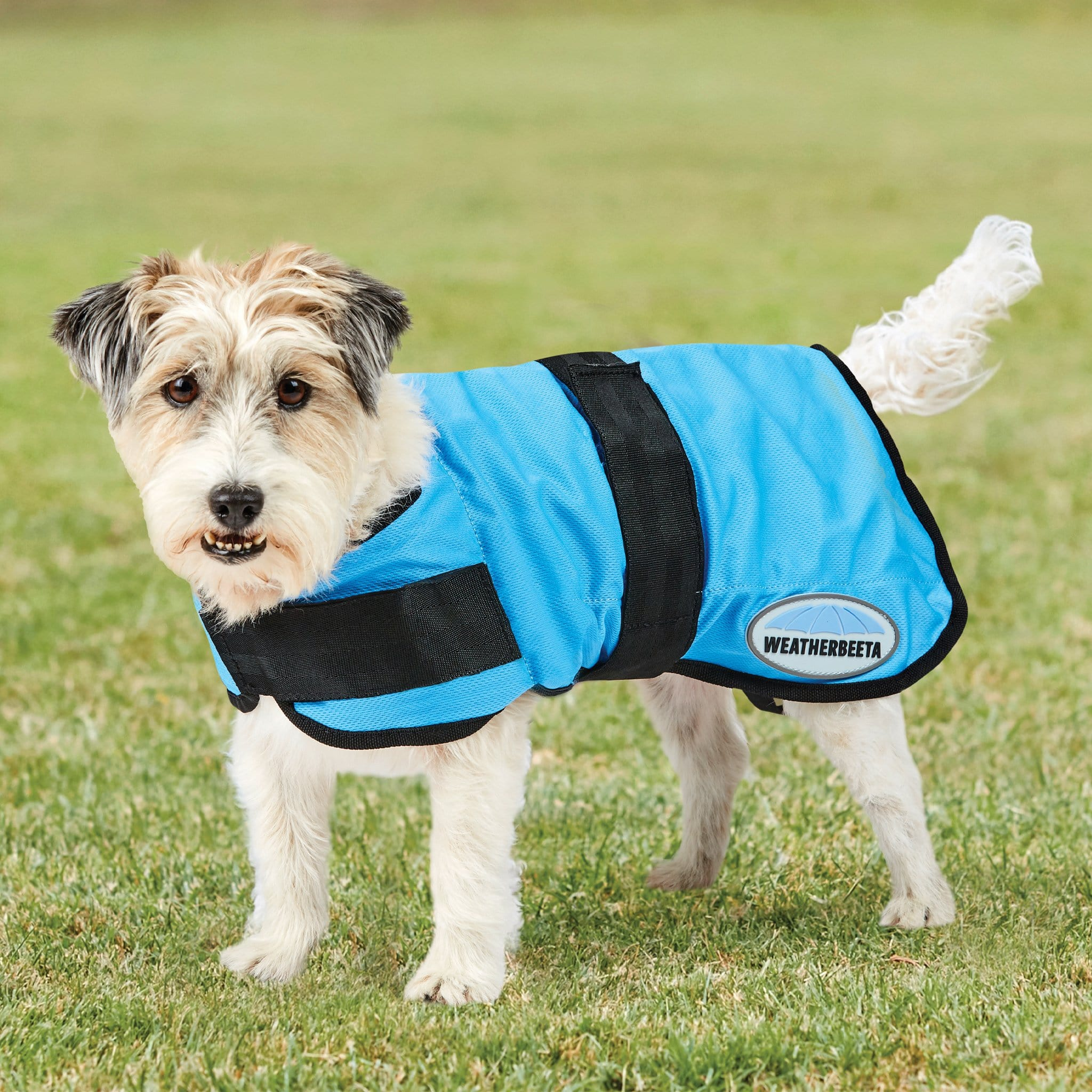 Weatherbeeta Therapy-Tec Cooling Dog Coat 1002307001 Blue On Terrier
