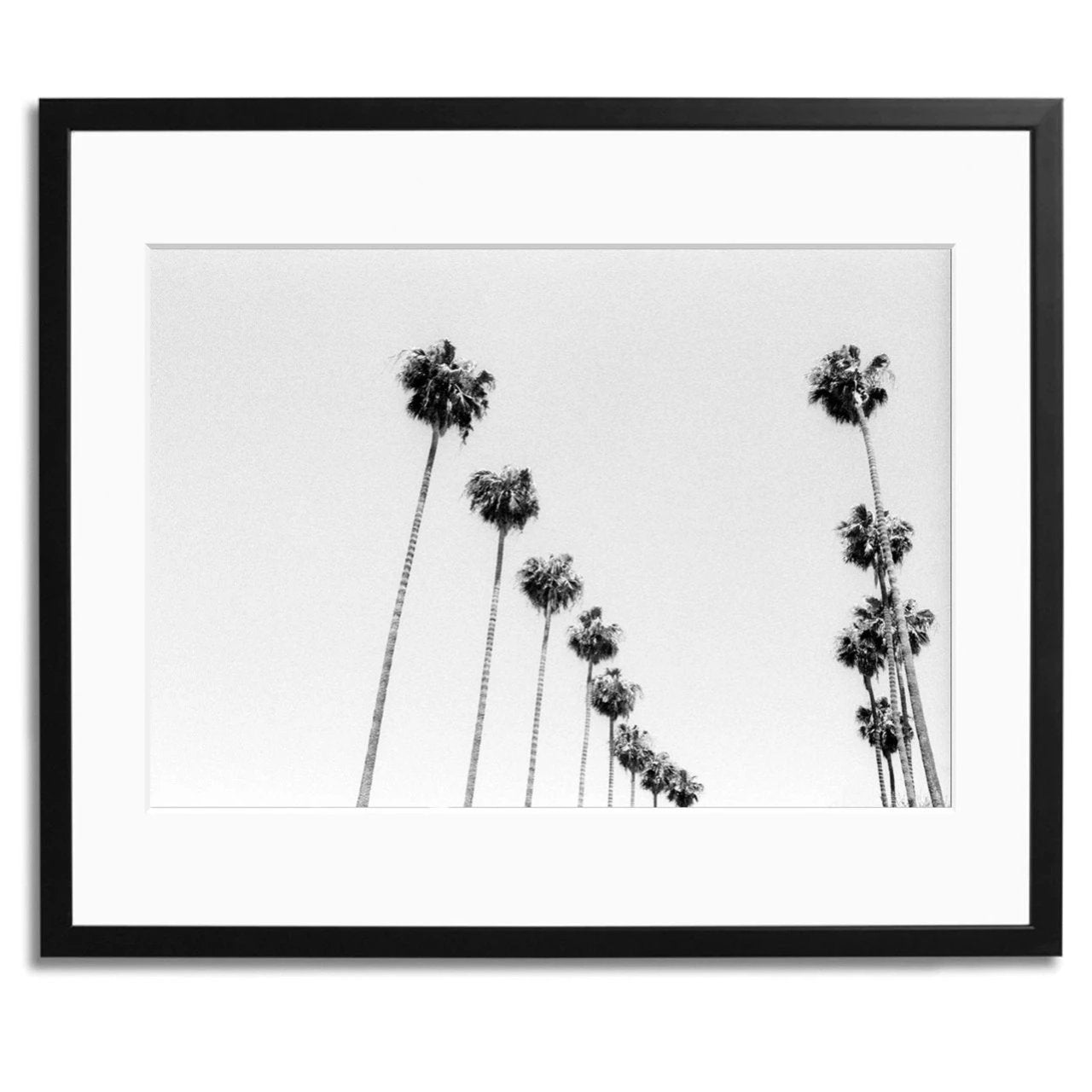 LA Palms Framed Print