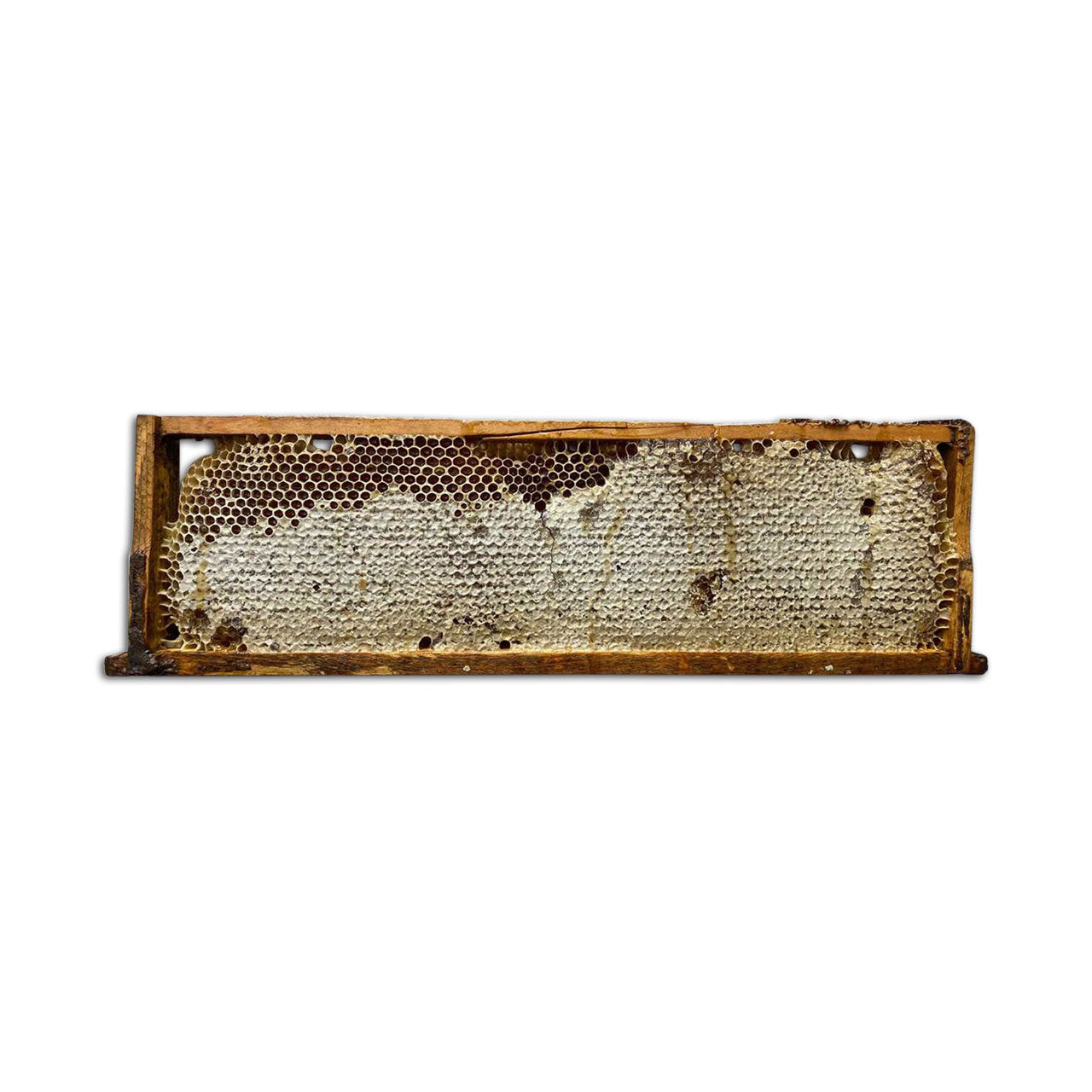 Black Locust Honeycomb